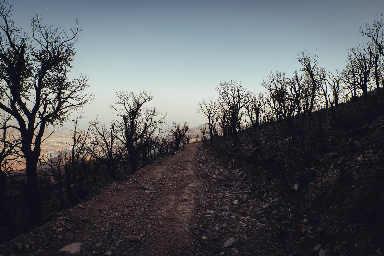 Dorija Apple Parsley_Mt.Lújar-6368