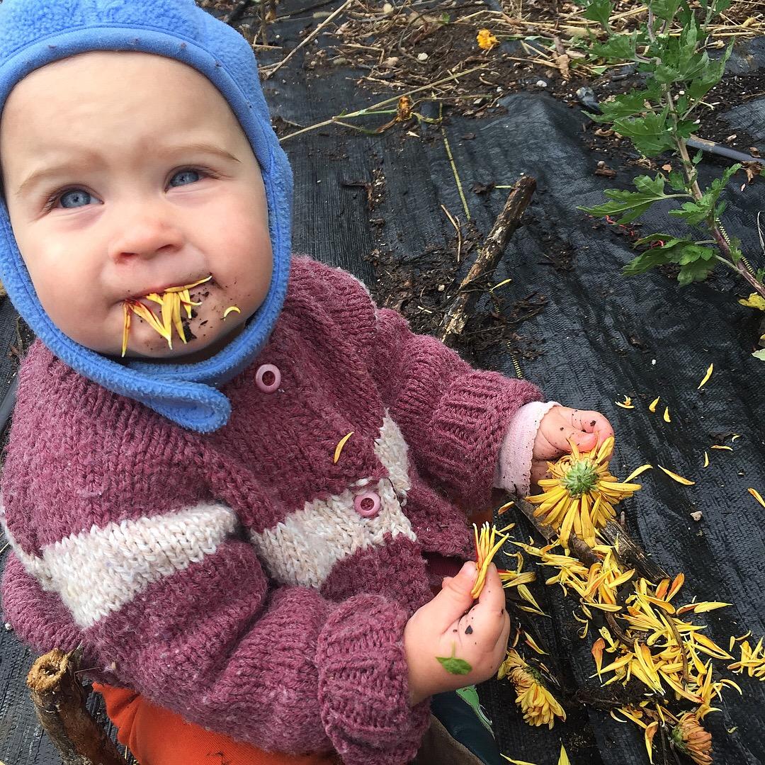 Calendula is edible!