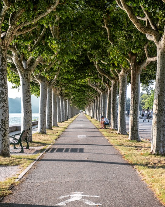 Walking in Aix-les-Bains, France, earlier this year in what was 40c on this particular day. The cool breeze coming off the water was most welcome and these beautiful trees provided shelter and a superb view.