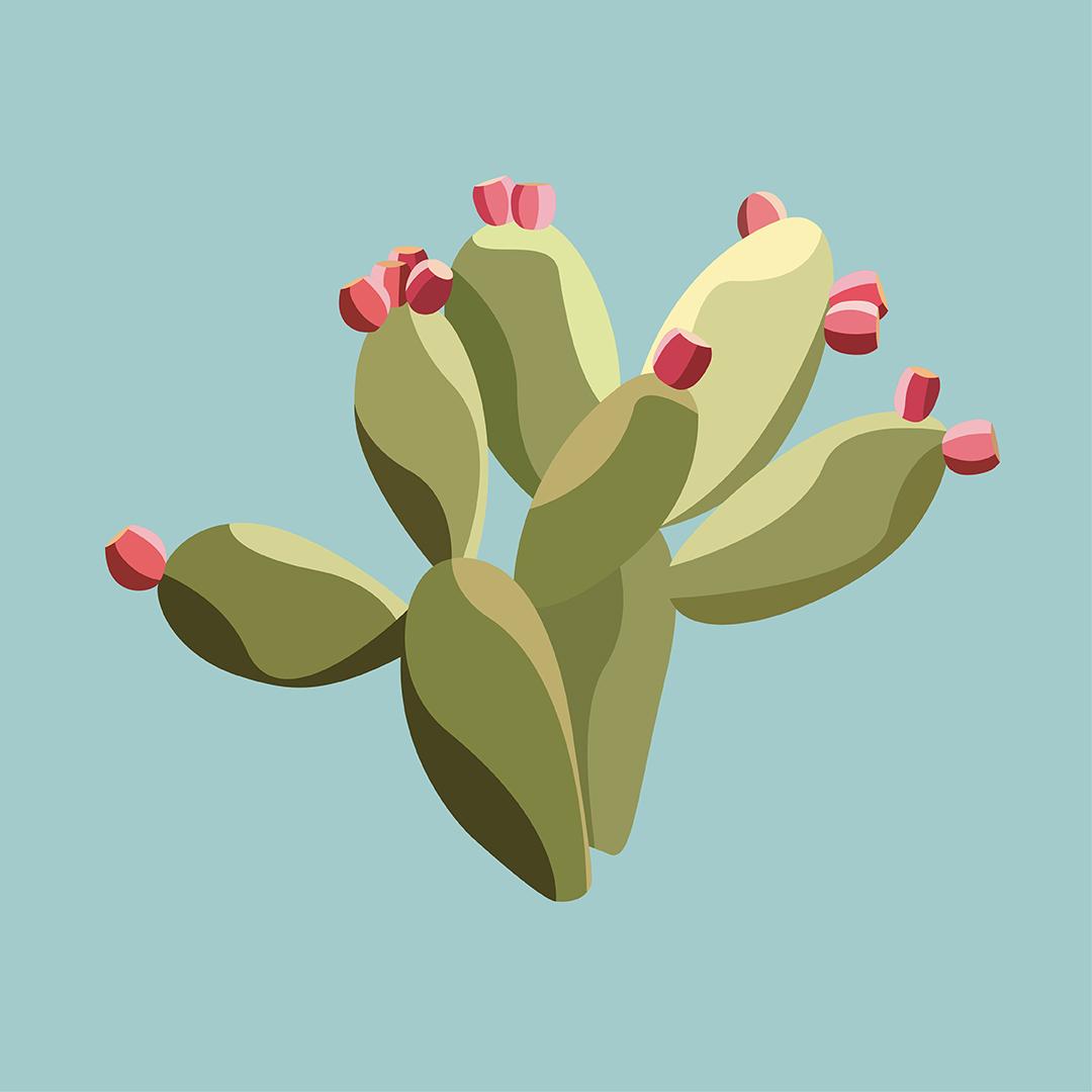 EvelinToledano_Cactus.jpg