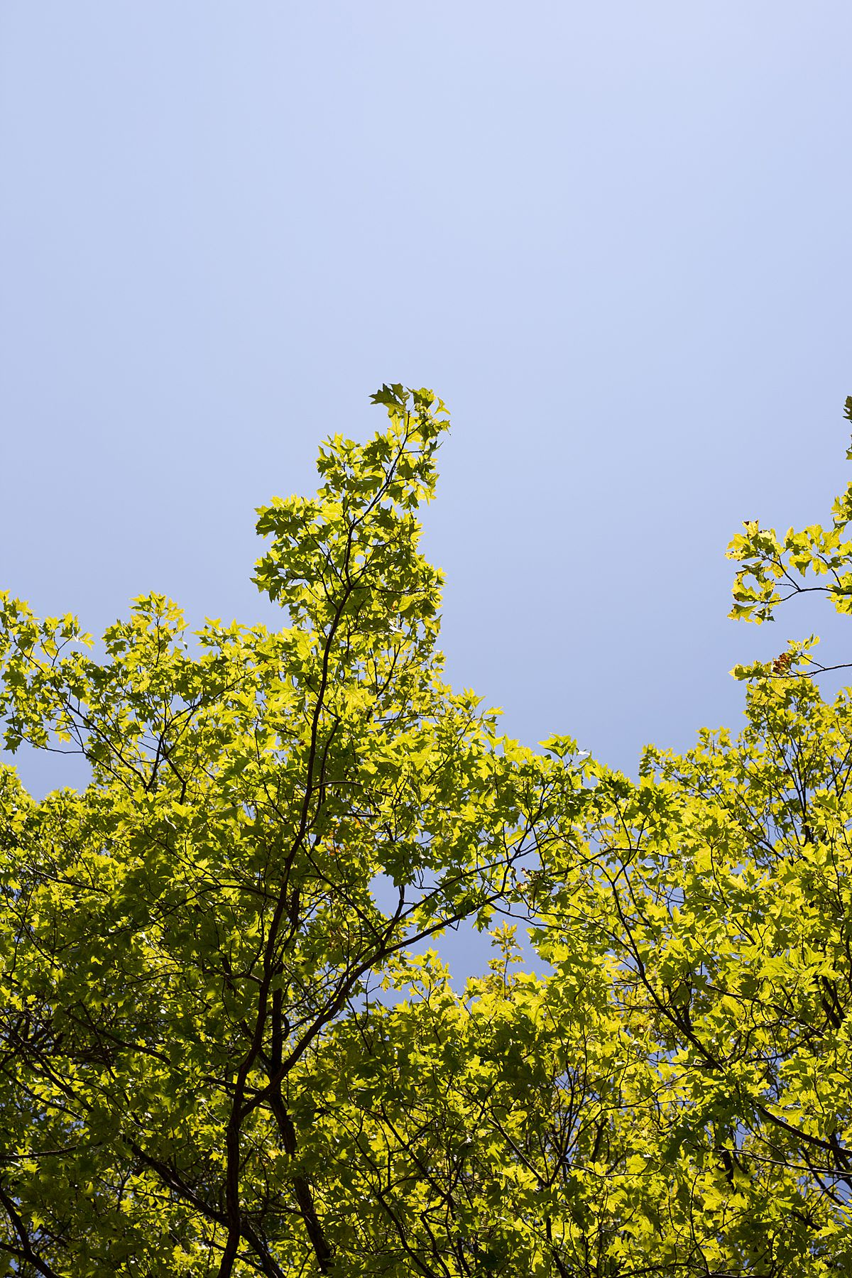 bright green tree leaves in washington heights