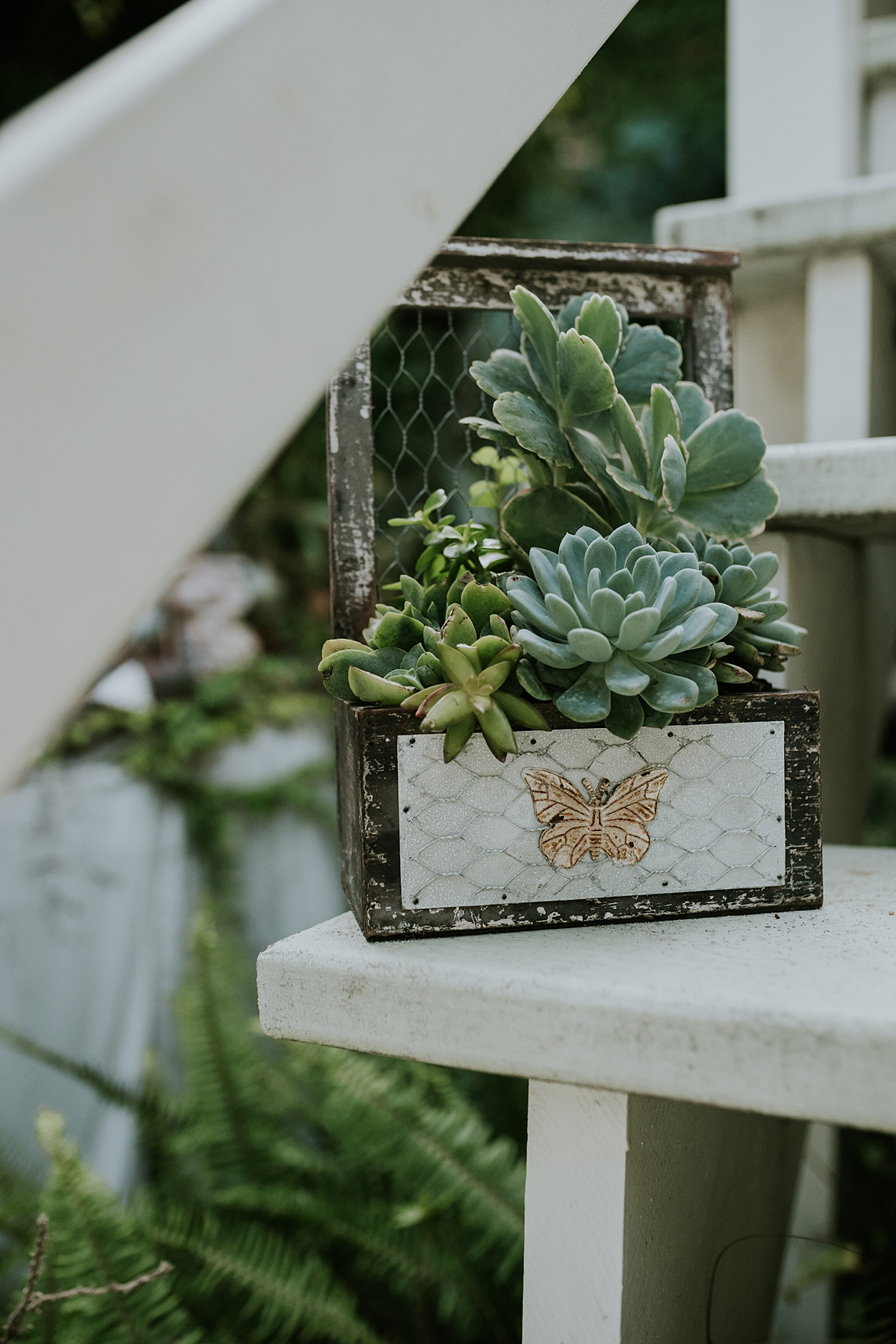Orange County family photographer. Photo of plant on steps of home at Huntington Beach