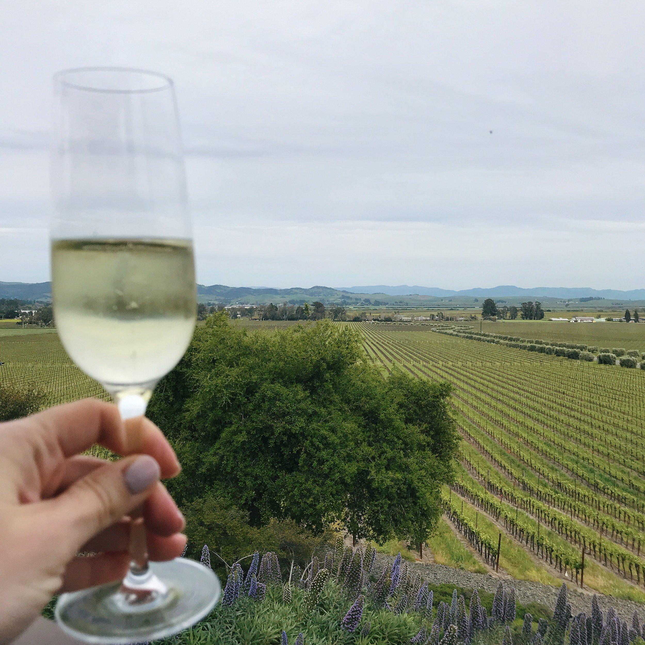 Gloria Ferrer vineyard