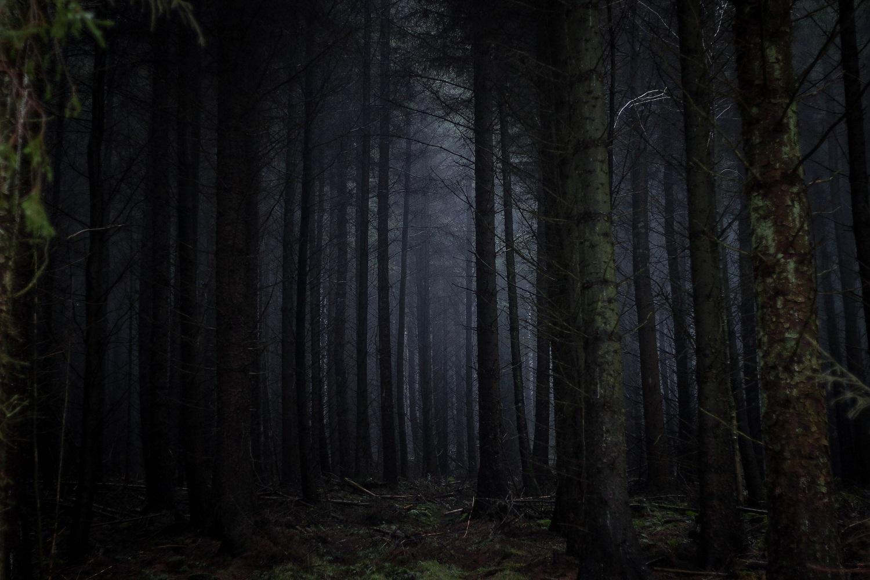 Bois Noir 3.jpg