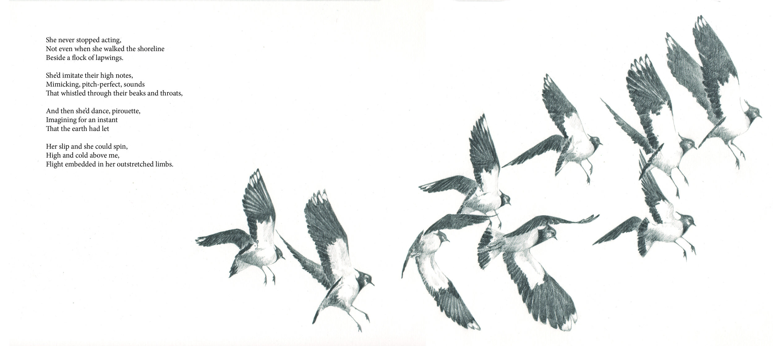 Lapwings I