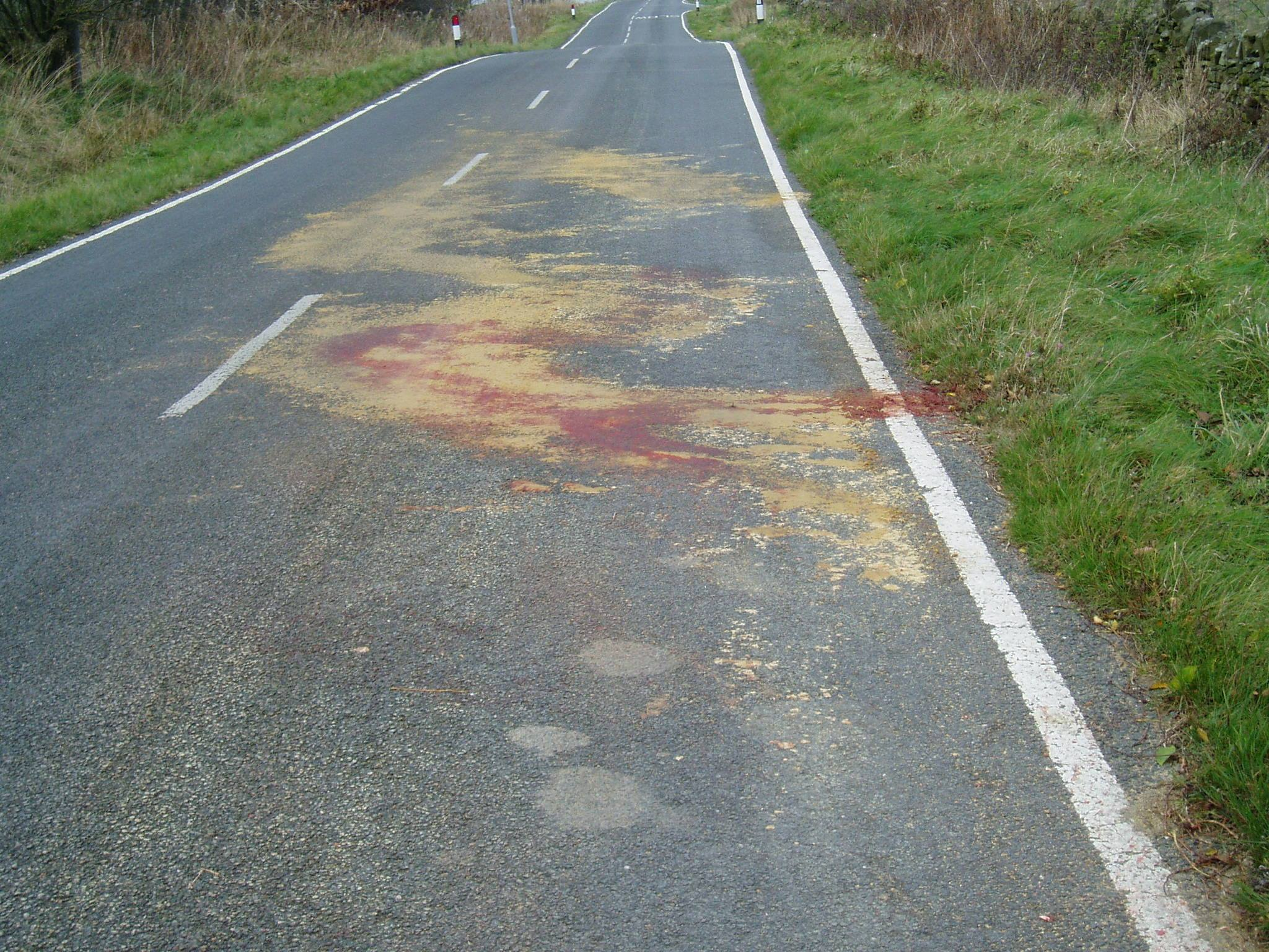 This grim image is the result of a pony being killed on the road as he jumped out of his field and was hit by a car. This happened because he was frightened by nearby fireworks. Be safe – look out for your horse and keep him safe. Don't consider hacking out, you can always do that another day. It simply isn't worth the risk!