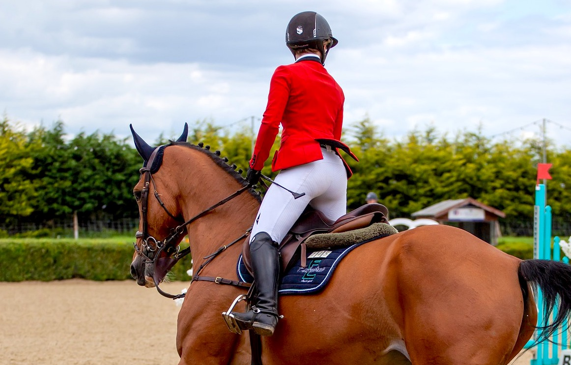 Whip use in showjumping