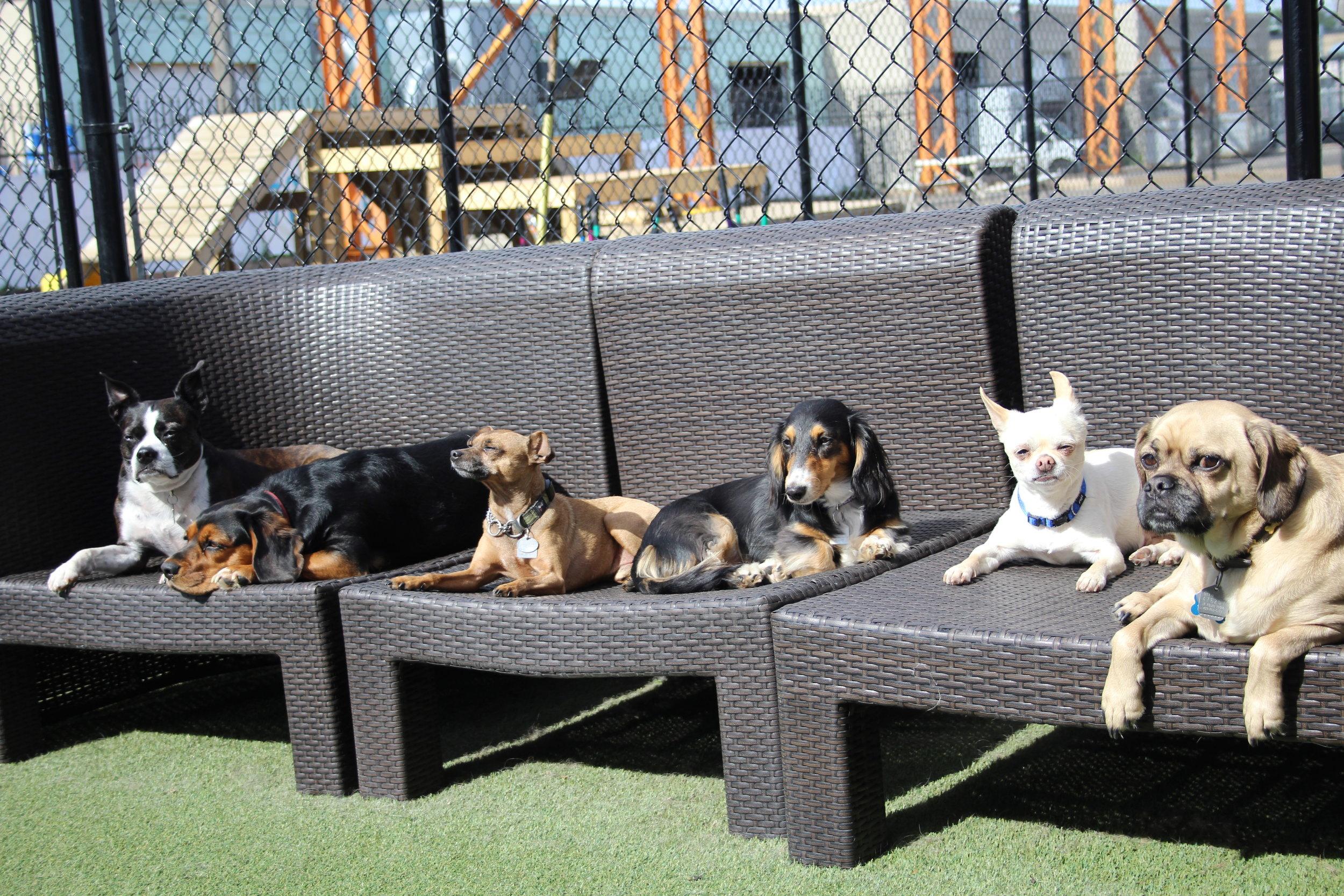 Thomas, Harper, Gordie, Chuka, Bennie & Jester - Summer 2016
