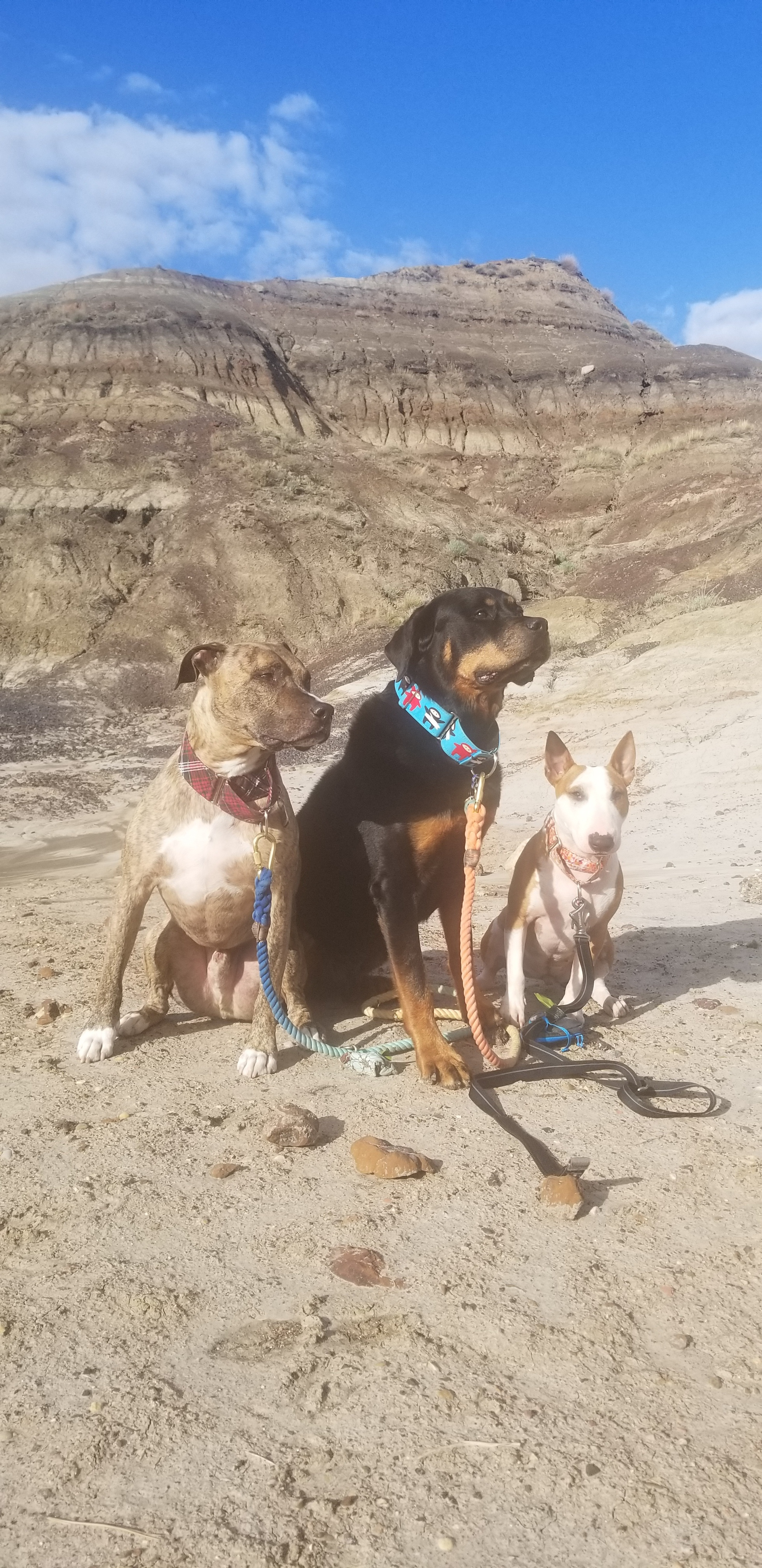 Drumheller Dog Offleash Park