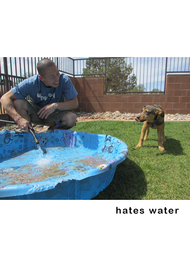 They HATE Water - If they hate the water, do not force them. Dogs should not be forced to do anything they do not wish. #splashzoneyyc is not for them!
