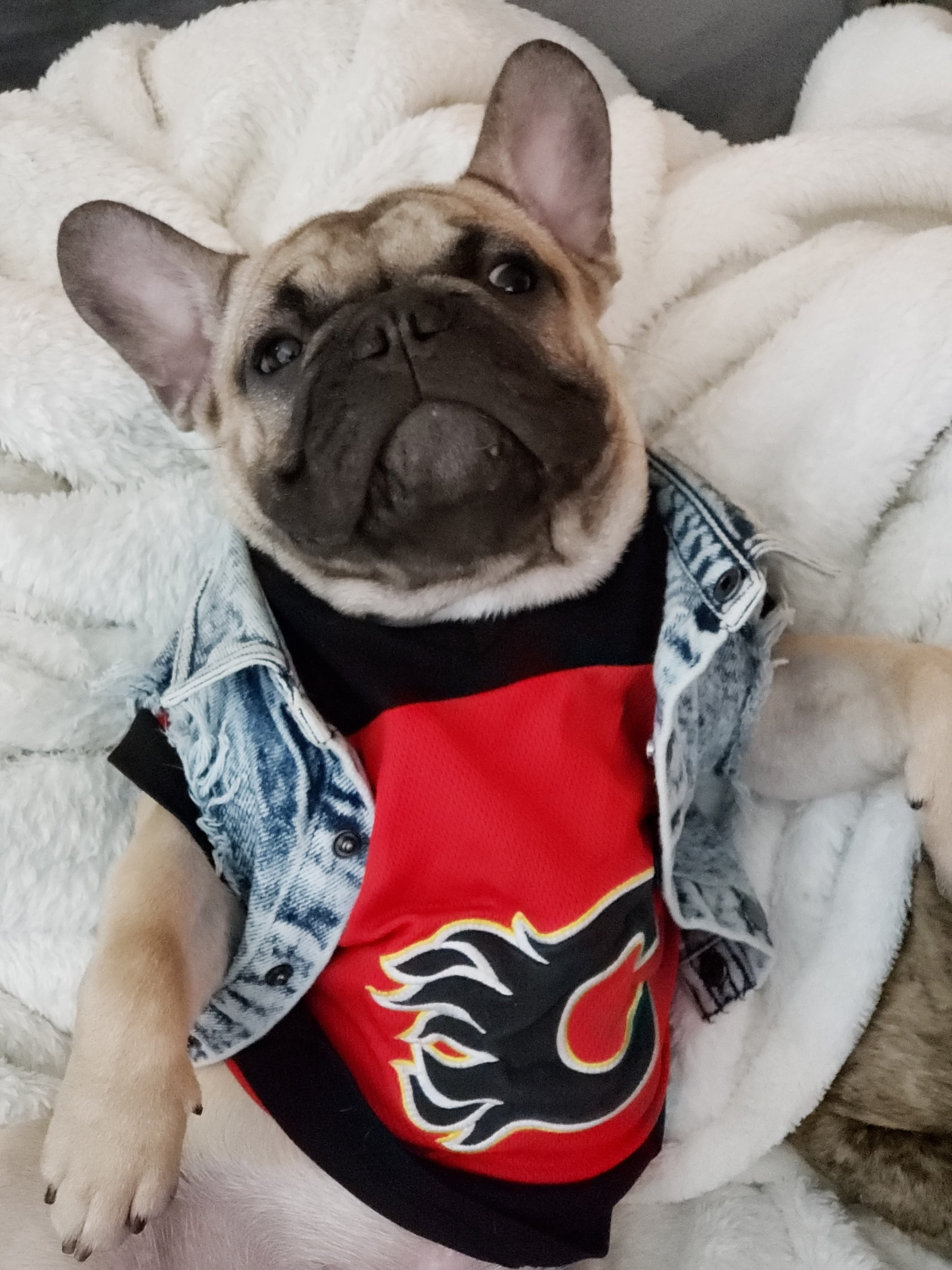 NHL Hockey Jersey's and Canada Pooch Line of Dog Apparel