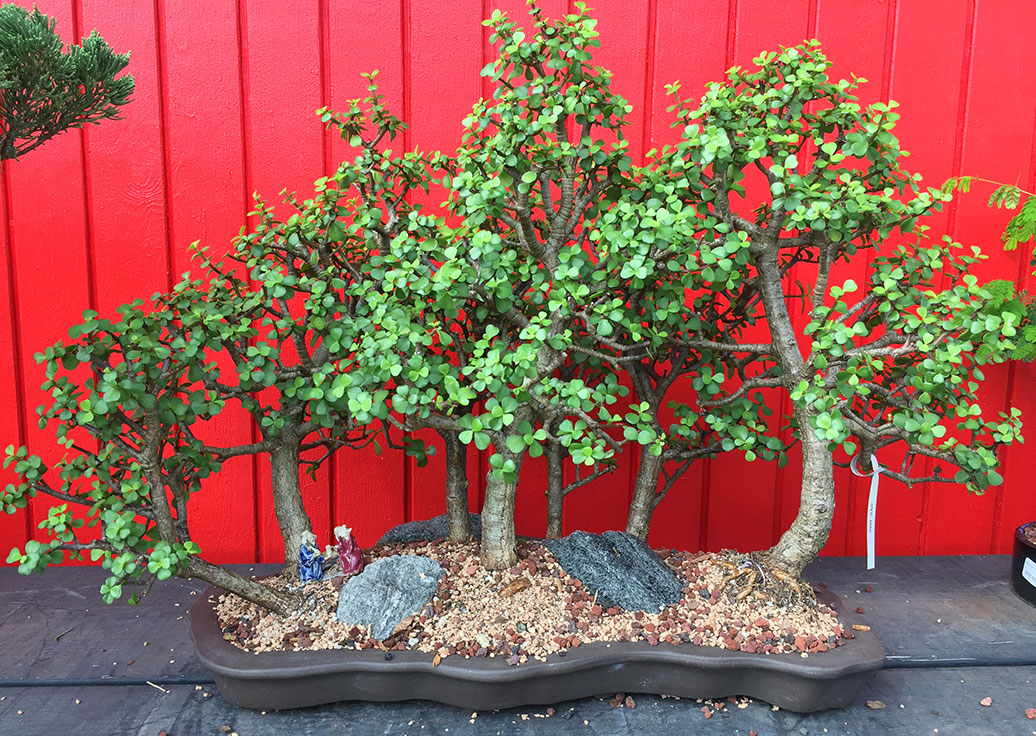gallery_bonsai8.jpg