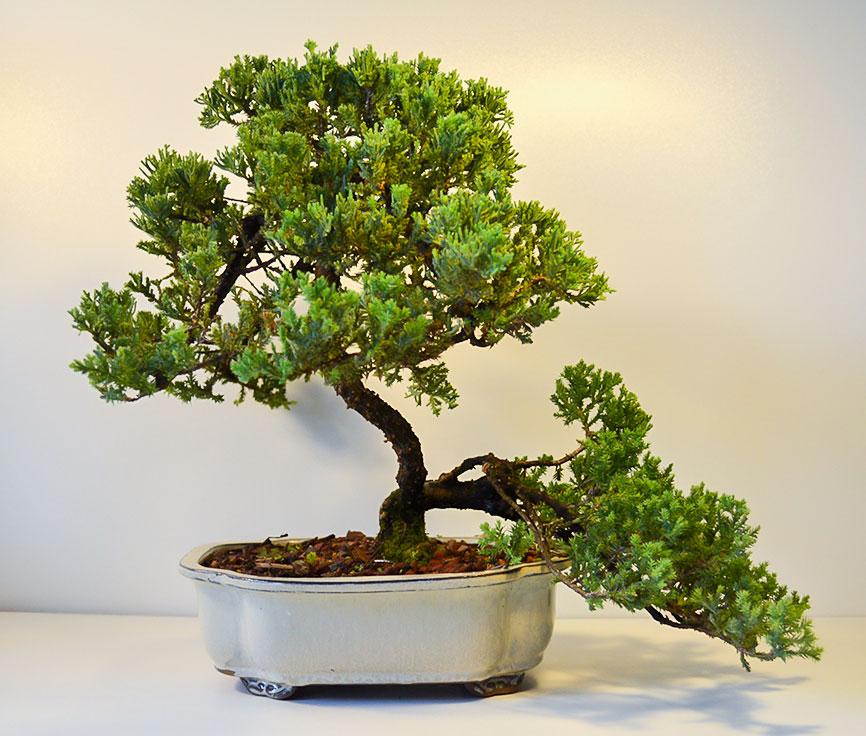bonsai_guy_logo.jpg