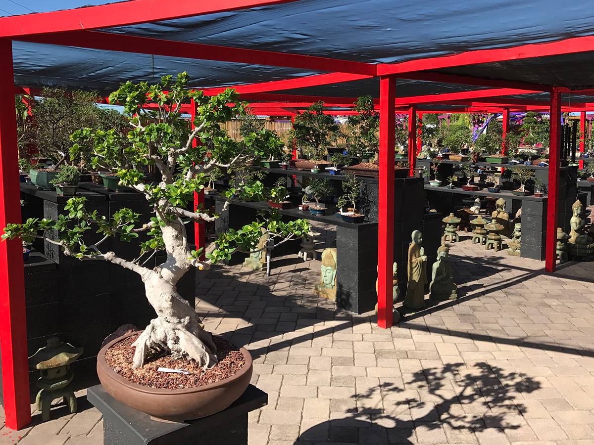 Tyler the Bonsai Guy - Flamingo Road Nursery1655 South Flamingo Road, Davie FL954-401-6477 Open 7 Days a Week 8:00AM - 6:00PMEmail: beautifulgardens1@bellsouth.net