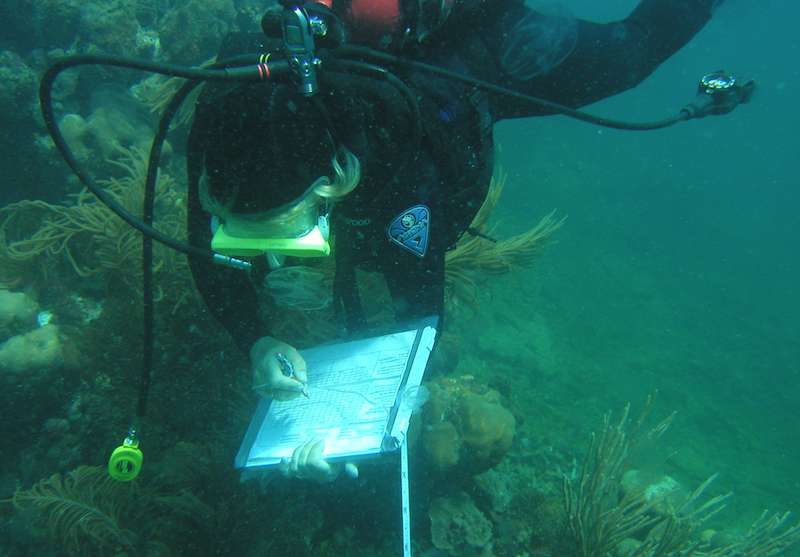 coral reef assessment