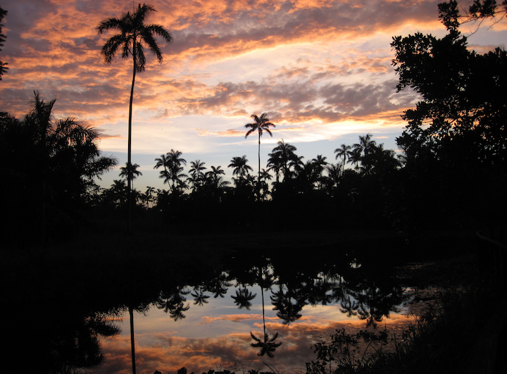 SUNSET AT THE ROYAL PALM RESERVE