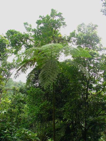 tree fern on ecclesdown road