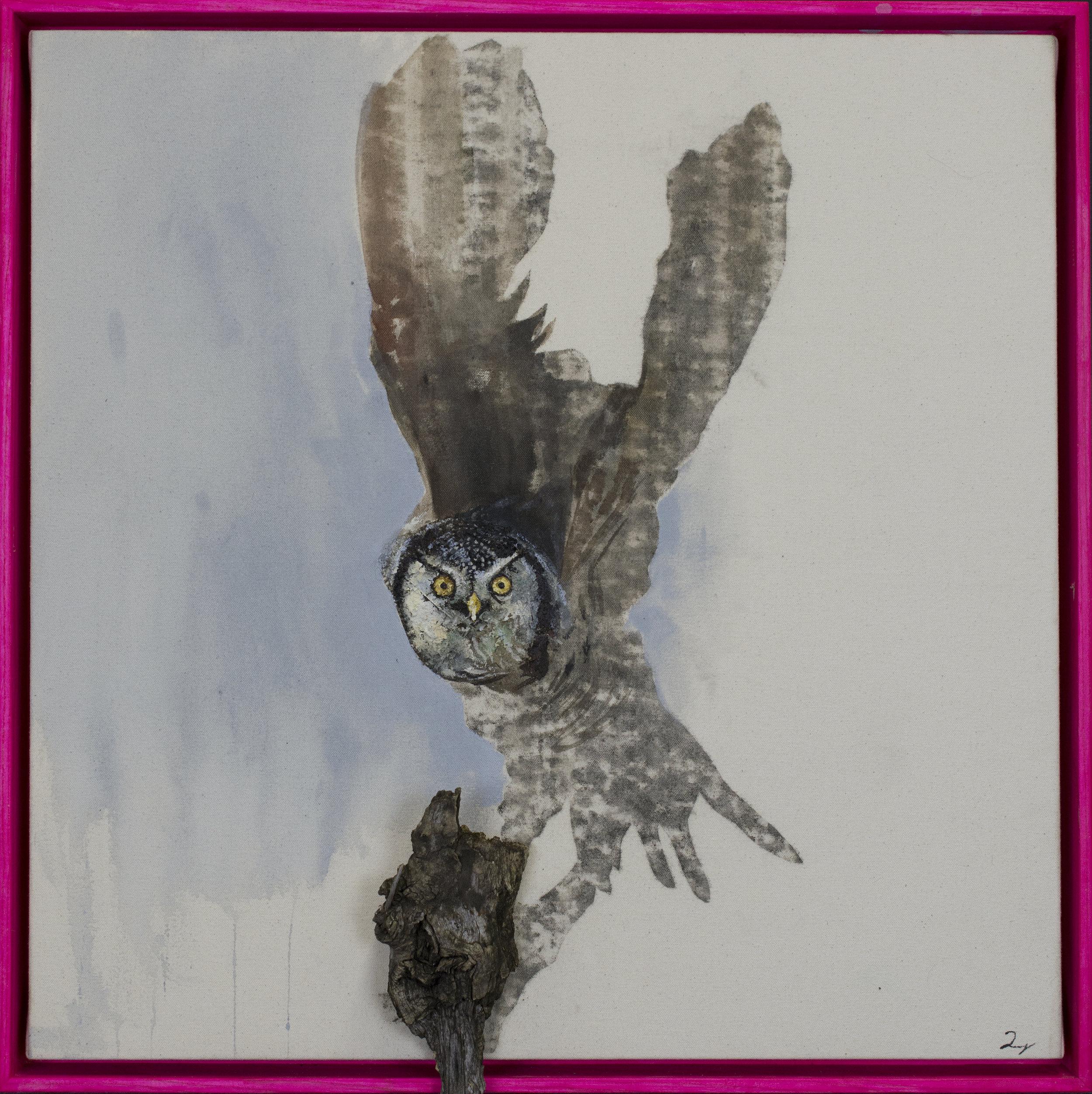 Earth Birds, Barn Owl