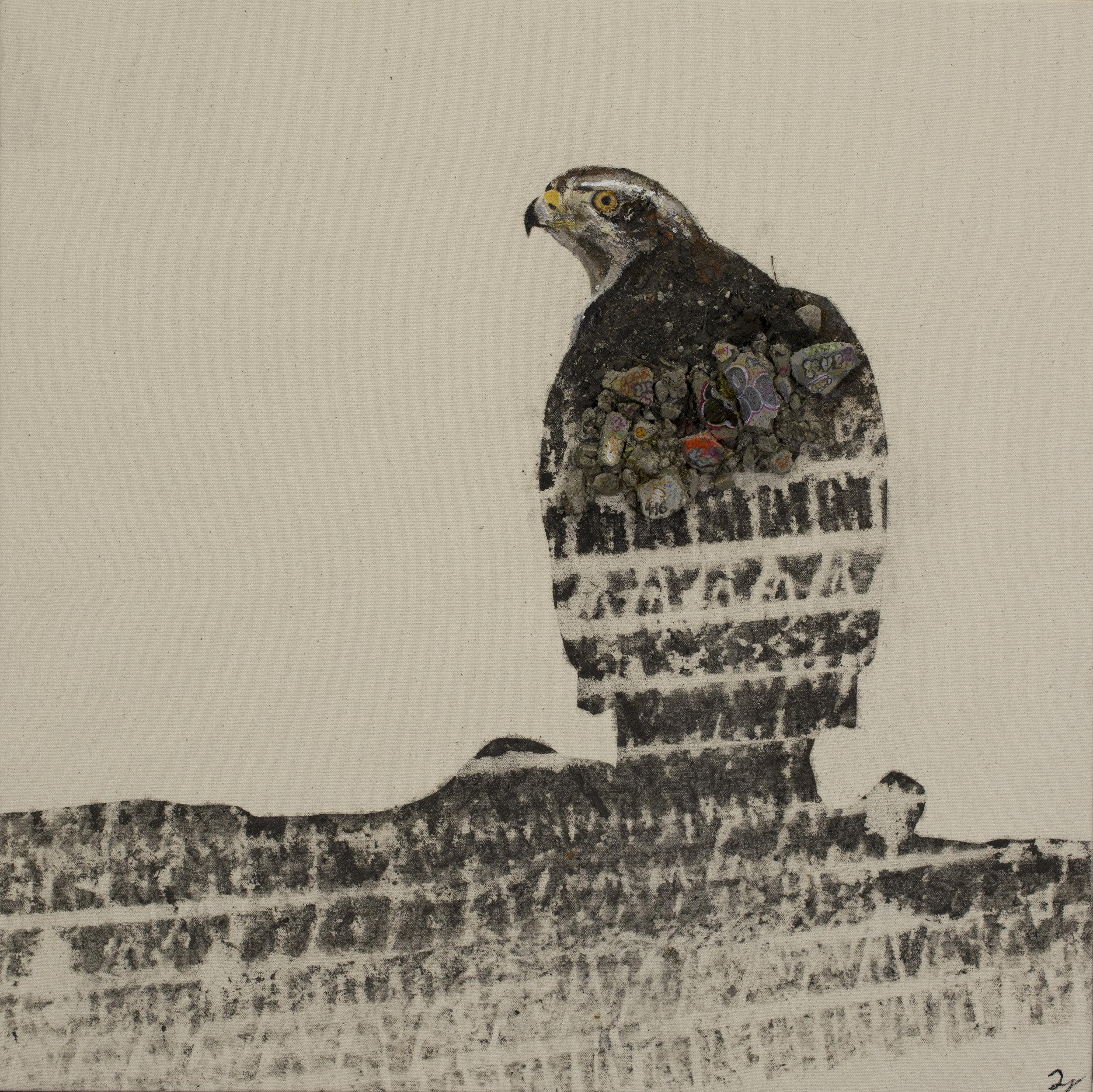 Concrete Jungle, Hawk