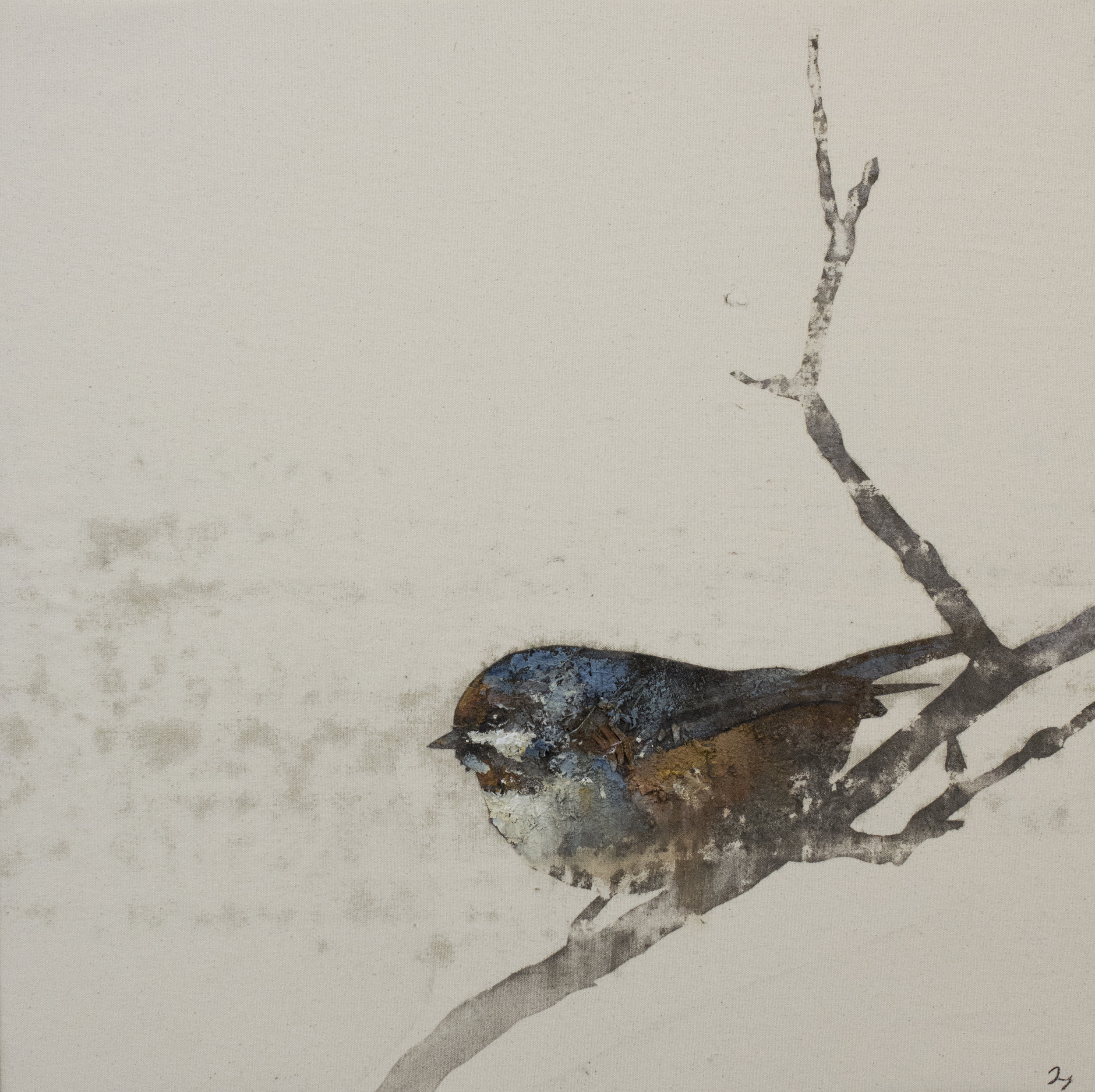 Earth Birds, Boreal Chickadee