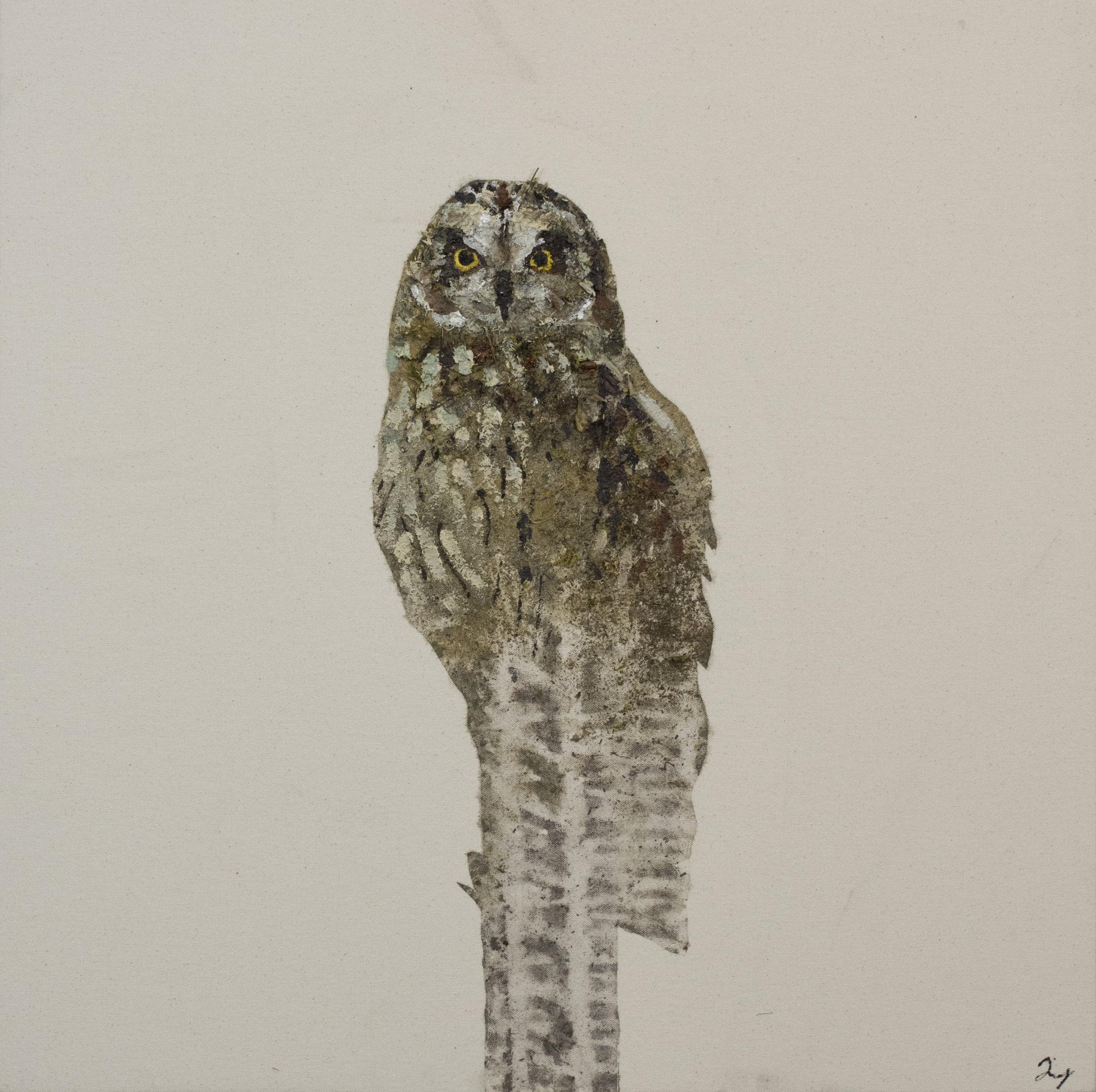 Earth Birds, Gray Owl