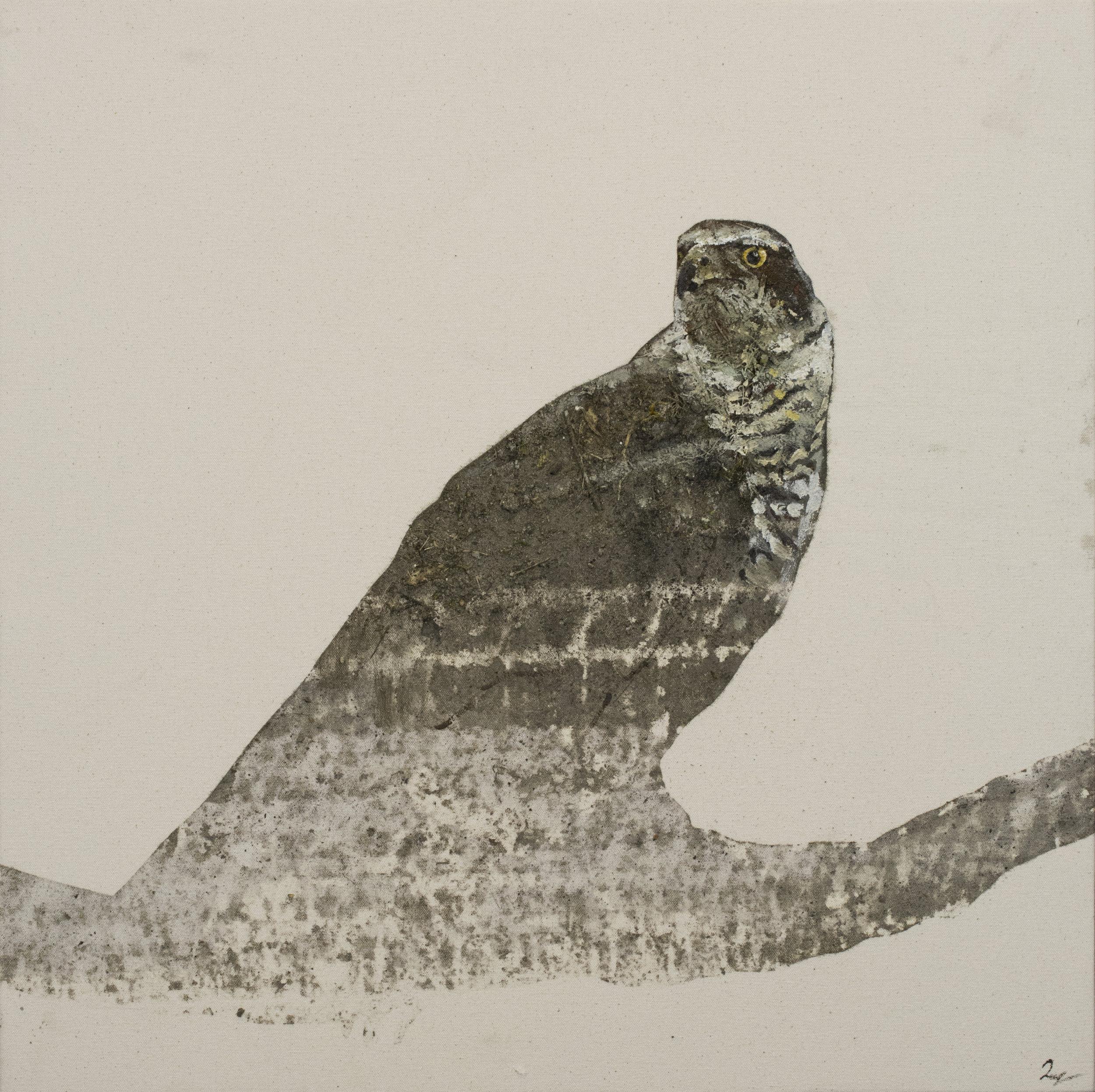 Earth Birds, Hawk