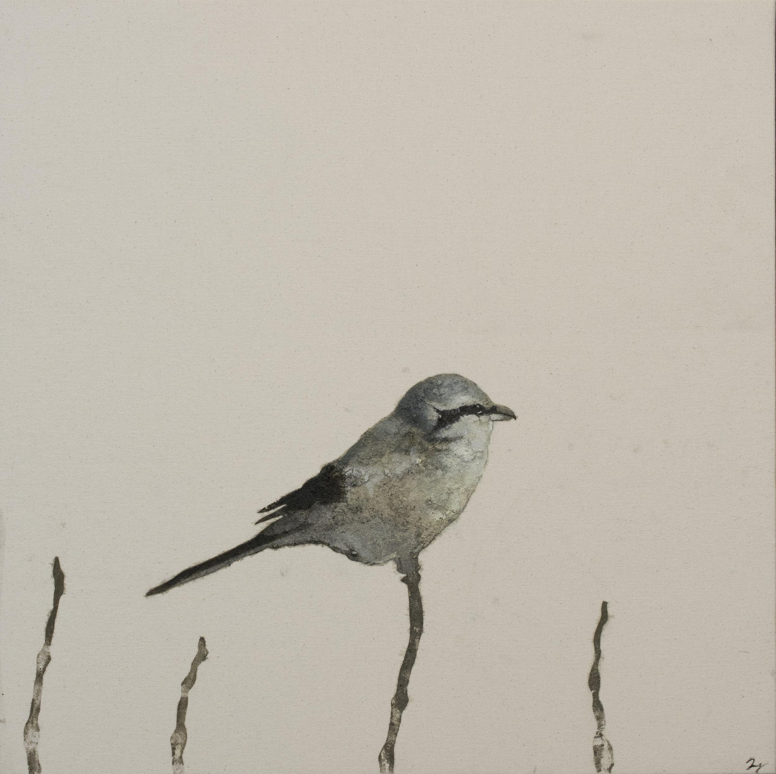 Earth Birds, Northern Shrike