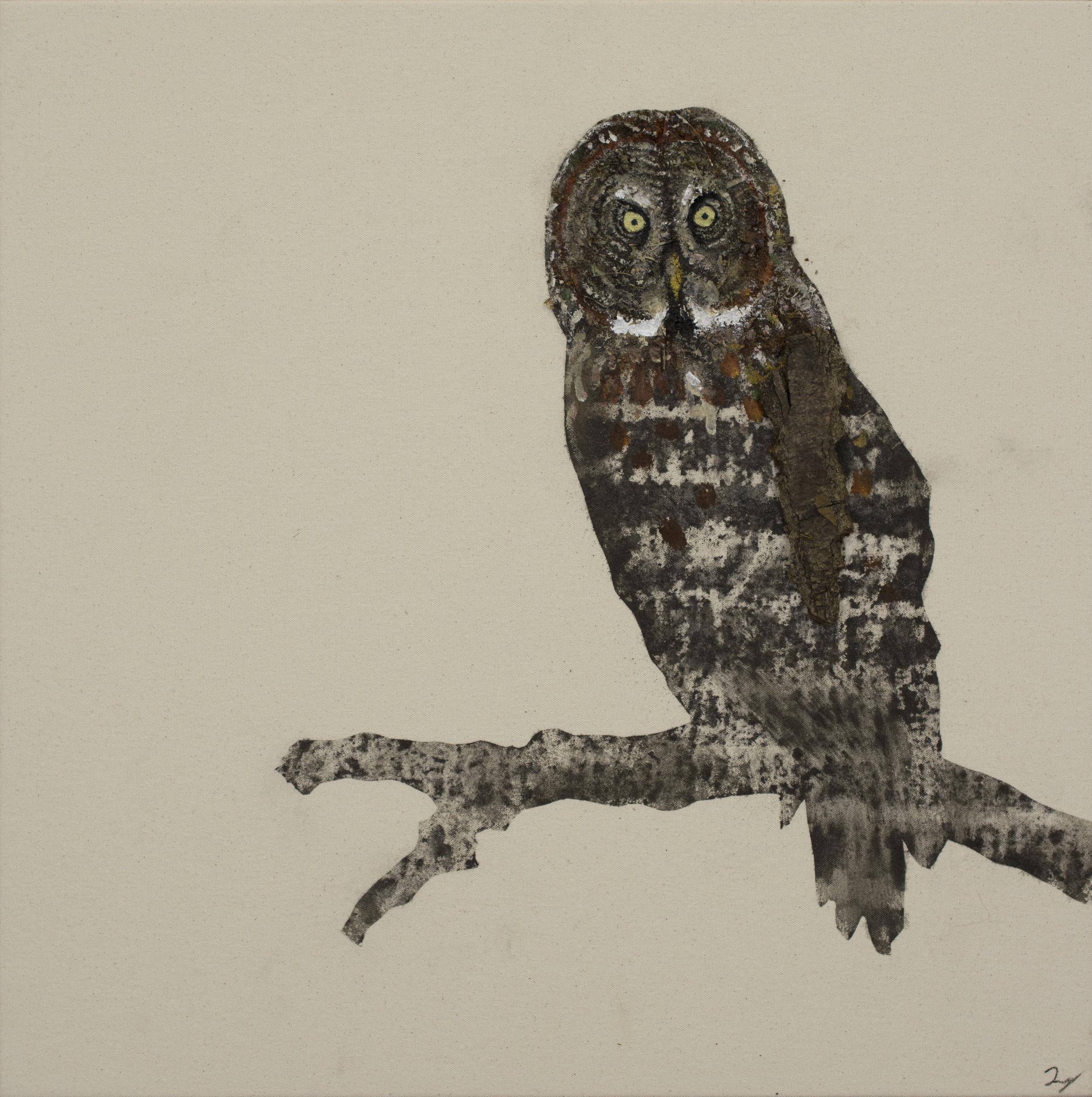 Earth Bird, Great Grey Owl