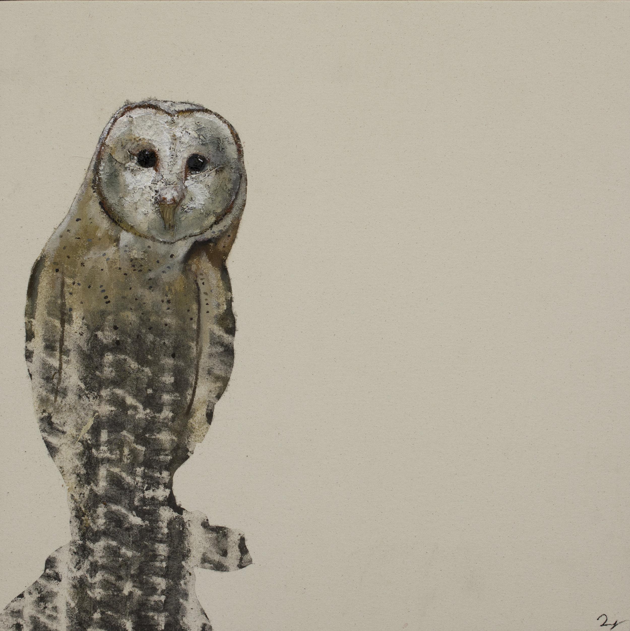 Earth Bird, Barn Owl