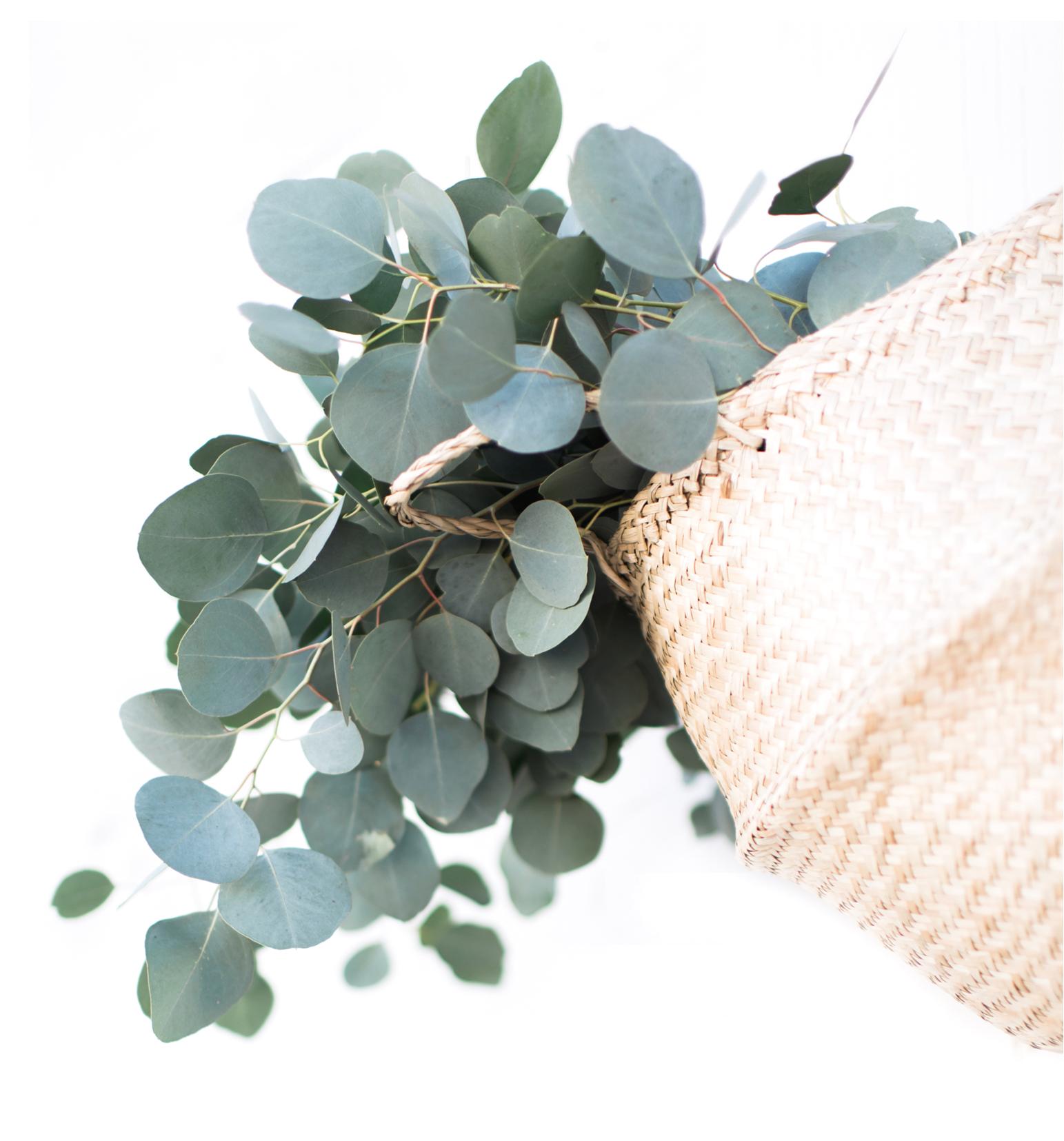 TwigyPosts-Eucalyptus-Mockups-7-web.jpg