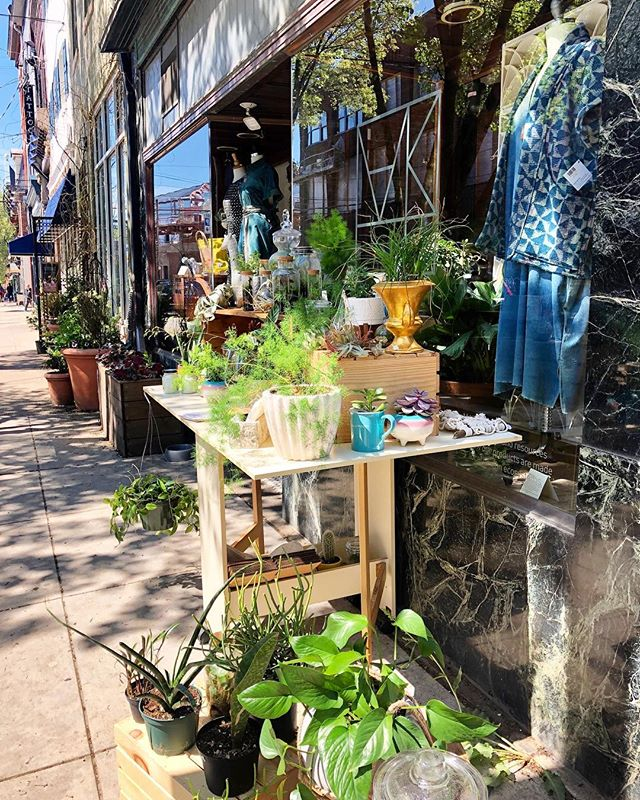 It's a beautiful day in Lawrenceville. Popping up at @shopmakeandmatter from 11-2 today 🌿🌿🌿 #plantpopup #localbusiness #womenownedbusiness