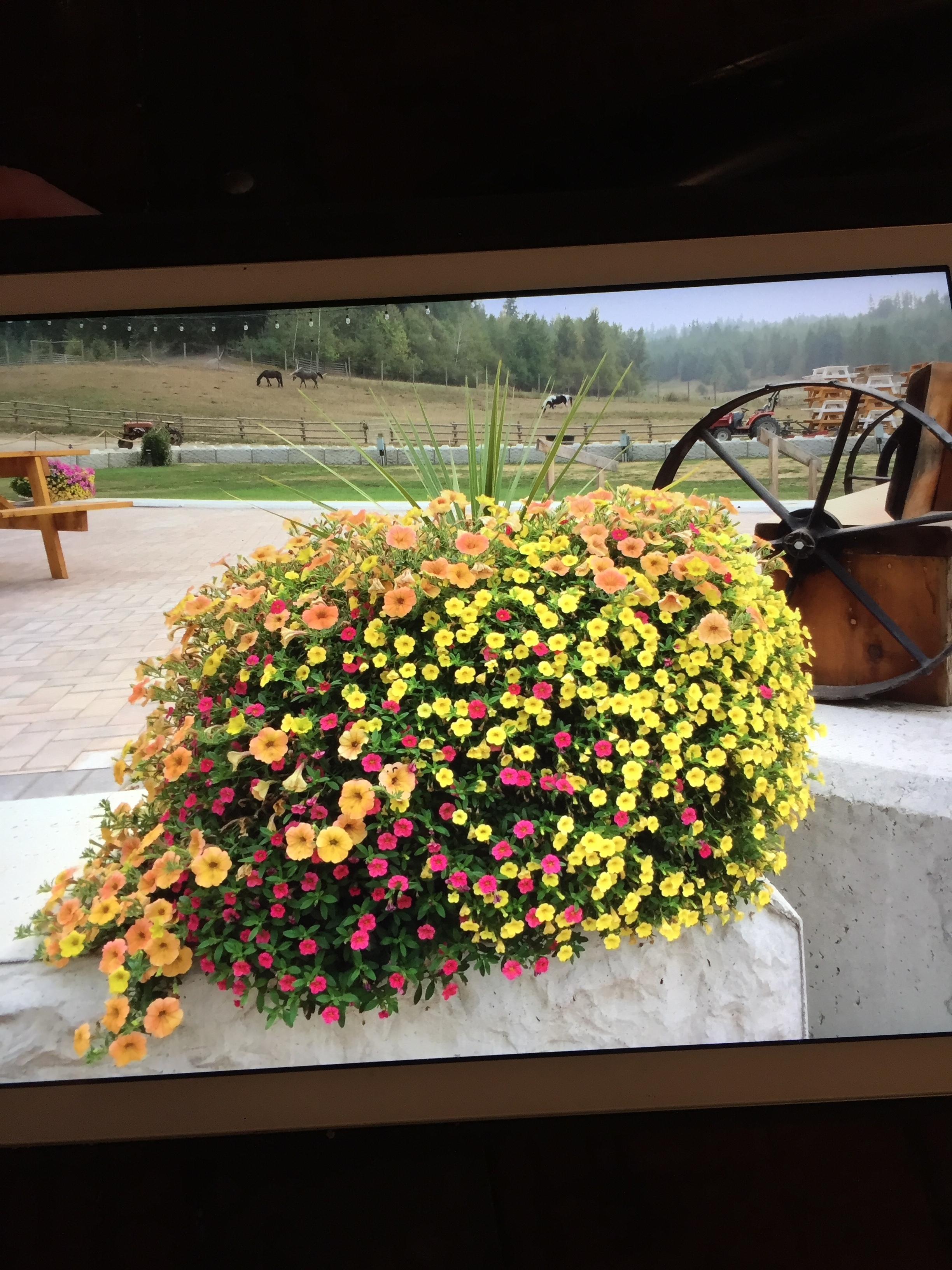 Flowers - Winery.JPG