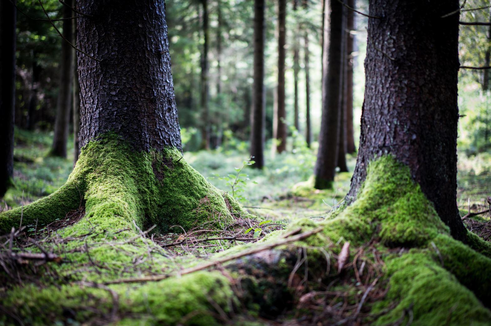 Bäume.JPG