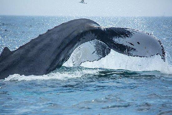 boston-whale-watching.jpg
