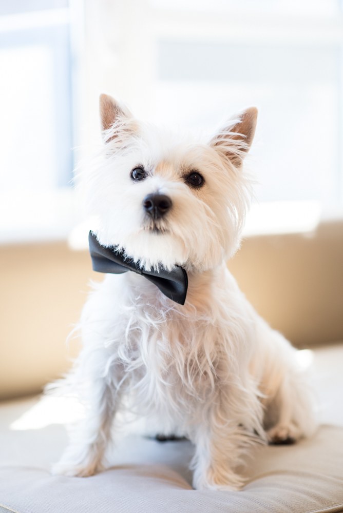 Getting ready with puppies for your wedding day