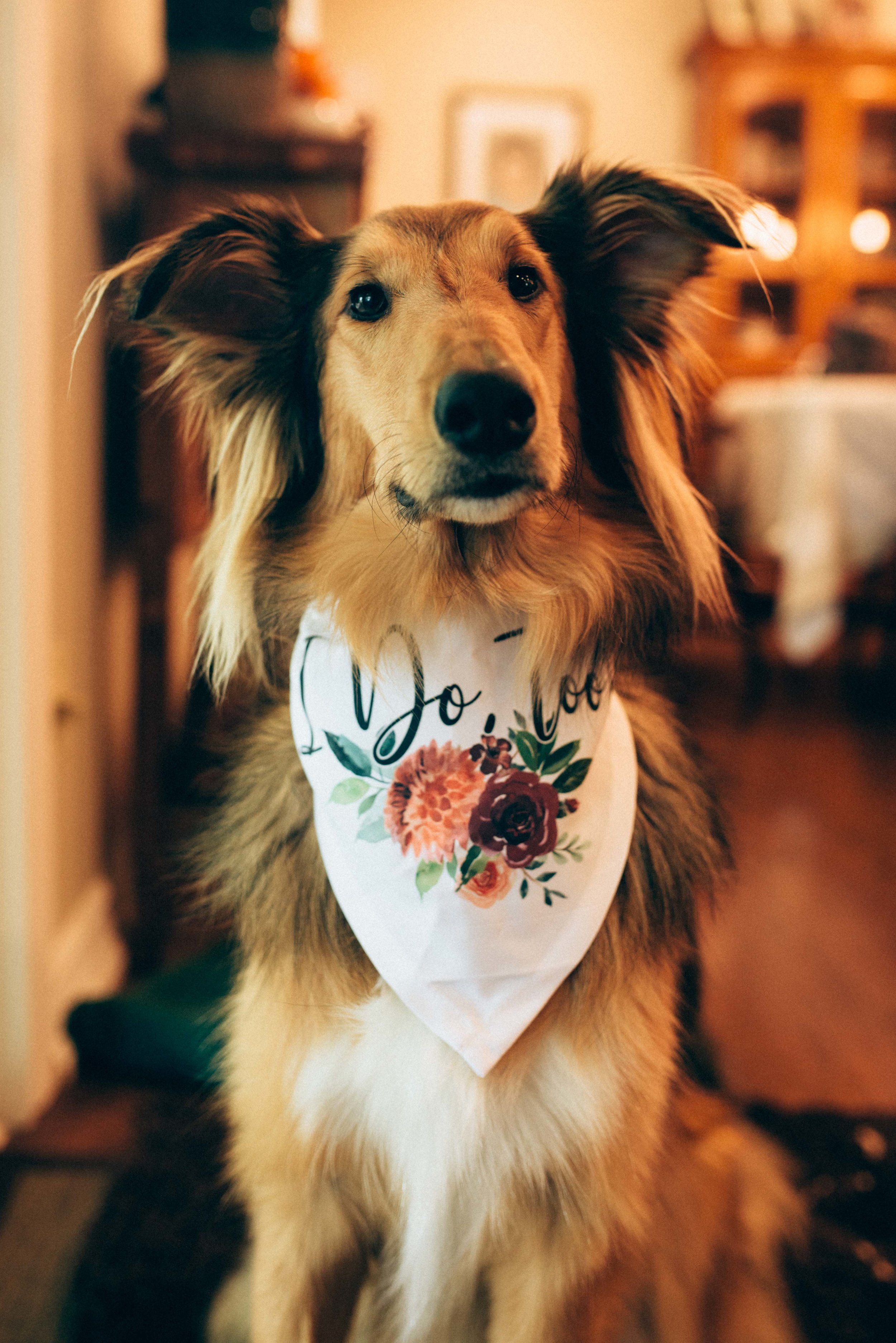 Dundas Valley Golf and Curling Club Wedding with Soundslikeyellowphotography wedding dog