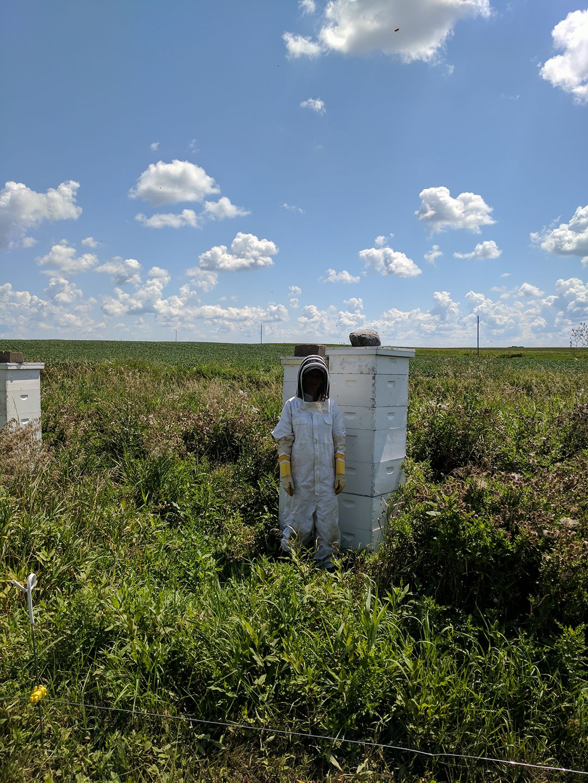 honey hives.jpg