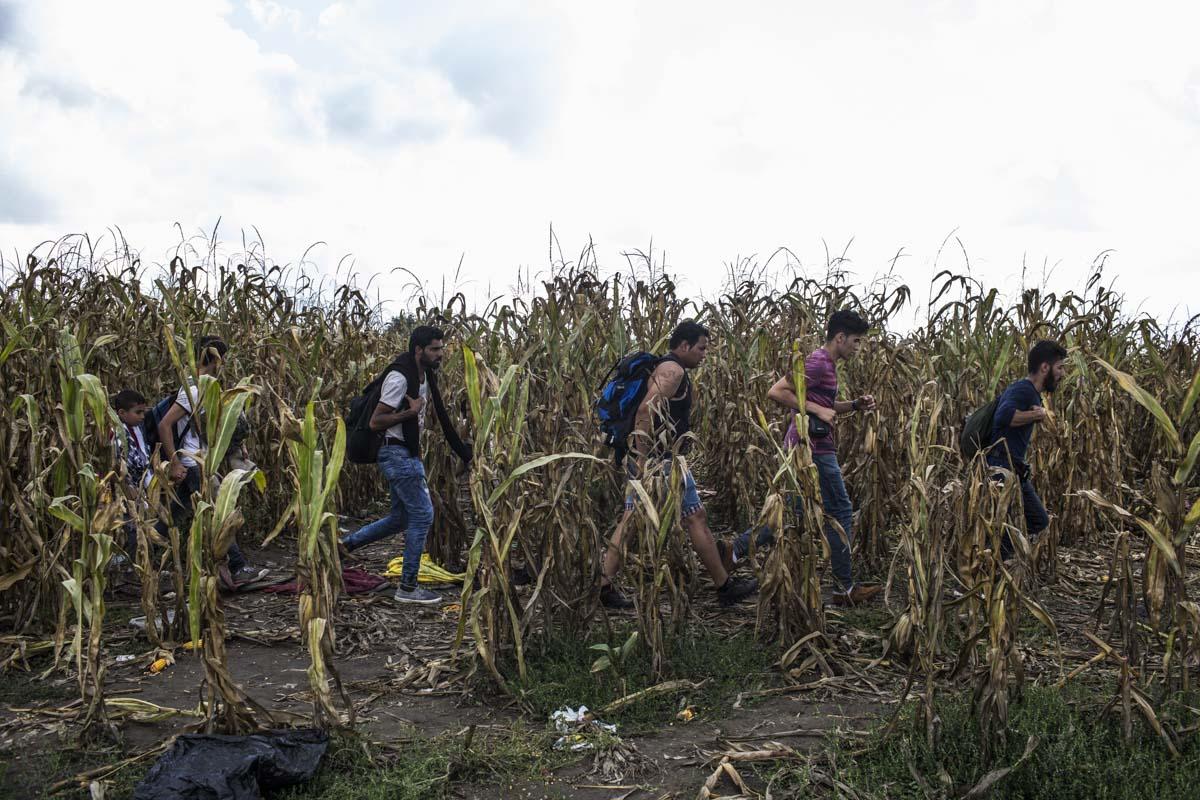 17_Migrants_low_website_.jpg