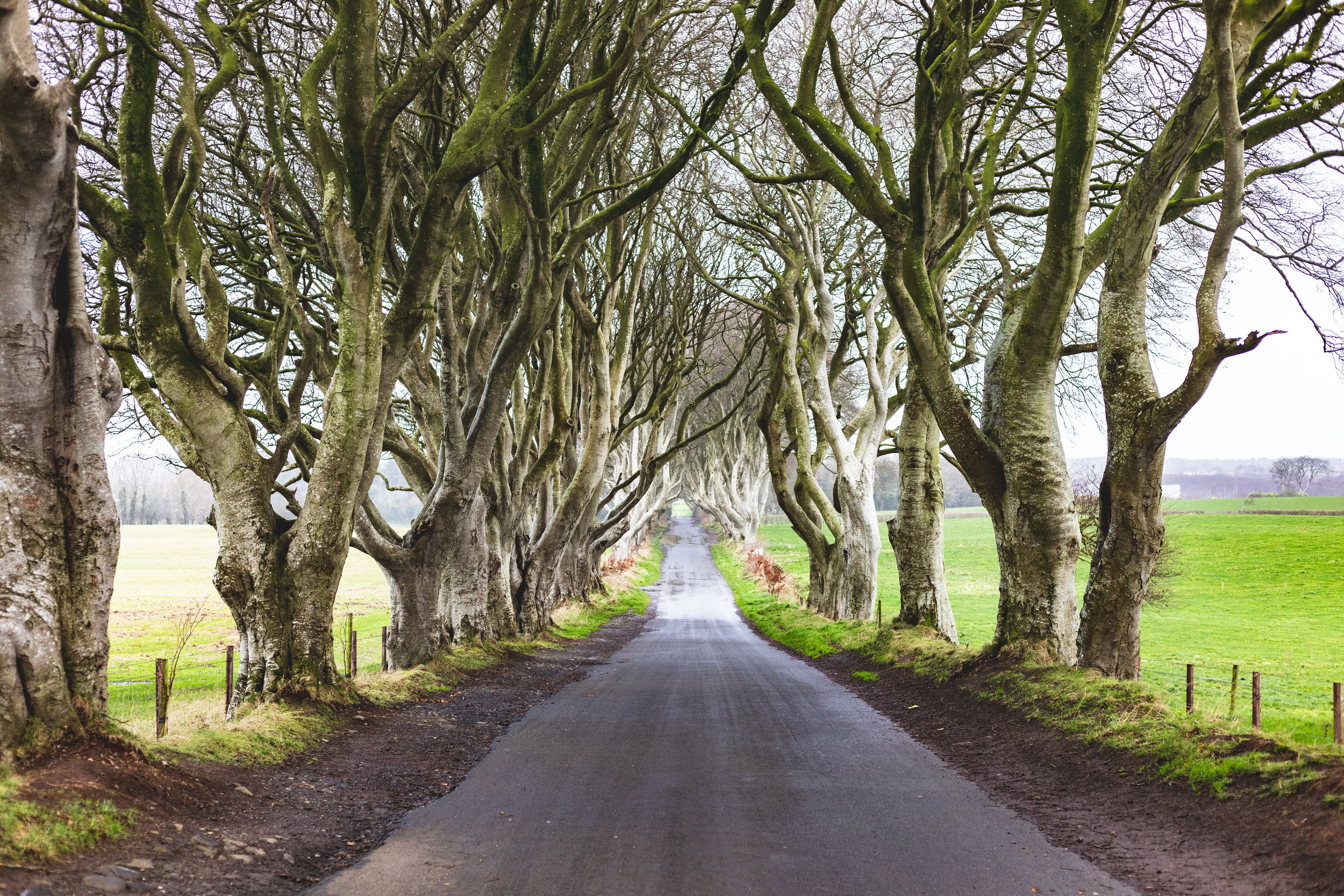 Dark Hedges & Giants Causeway.jpg