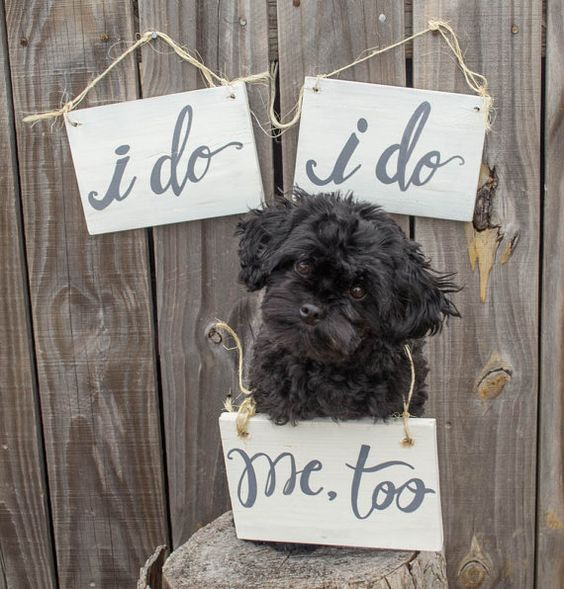 Found on Pinterest, another super cute way to incorporate your dog into your photo shoot.