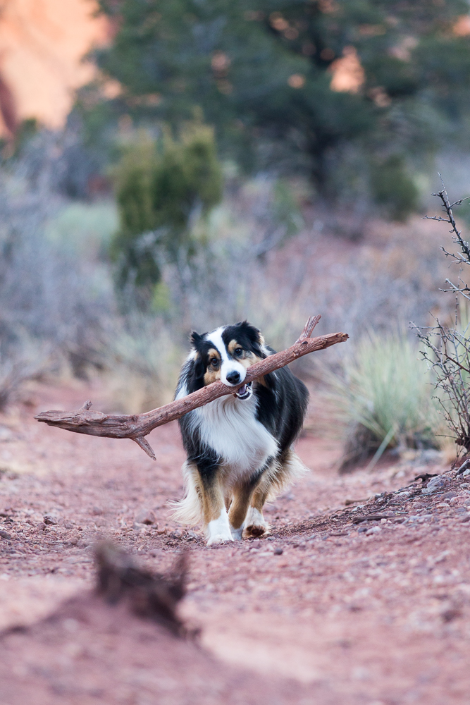 Arroyo found a really, really big stick!