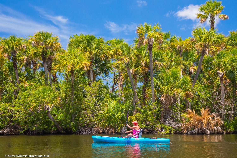 Kayaking past a cluster of sabal palms on the Sebastian River.