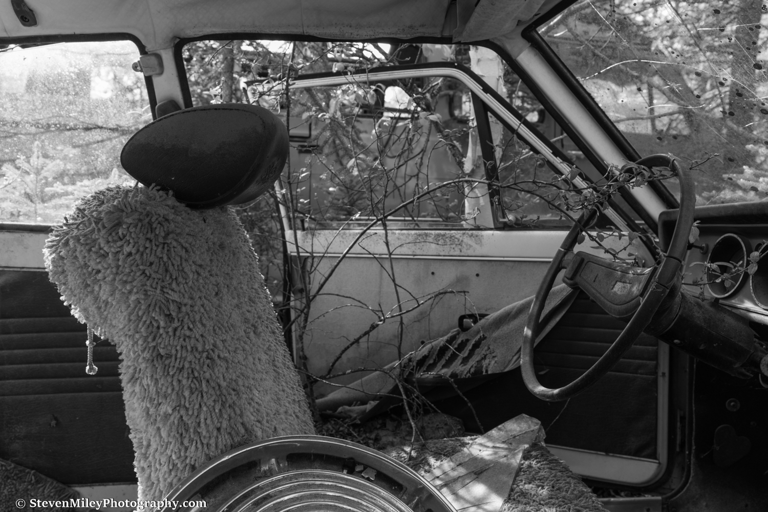 Many of the vehicles in the junkyard still contain bumper stickers, decals, and other additions like the shag carpet seat cover in this Datsun 1200 that recall the personal lives of their past owners.