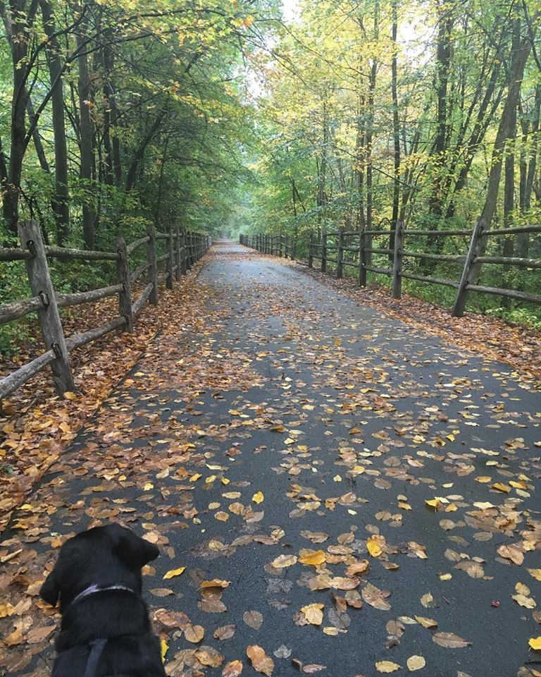 2018 fall walk G.jpg