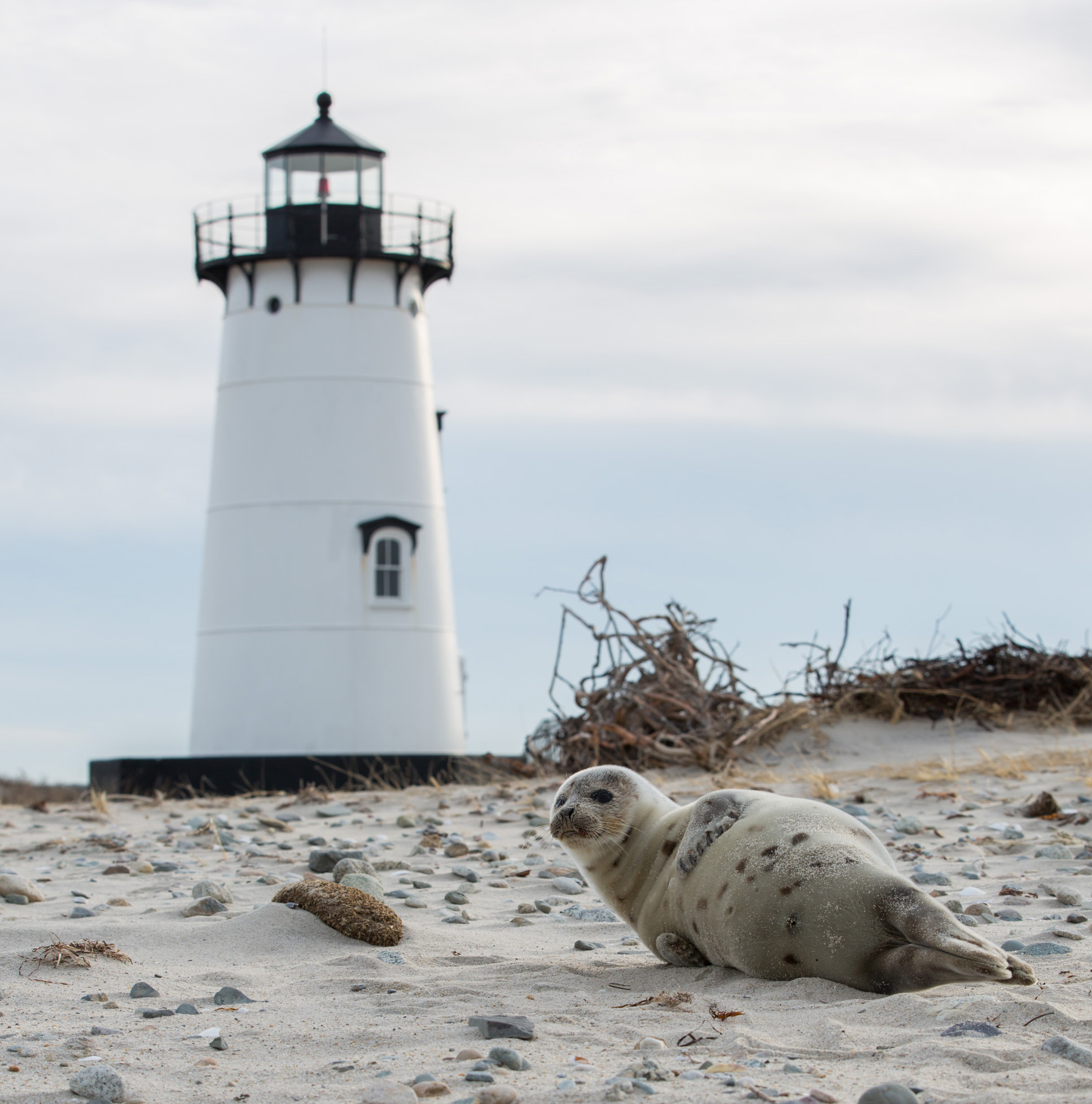 3.25 LIGHTHOUSE SEAL
