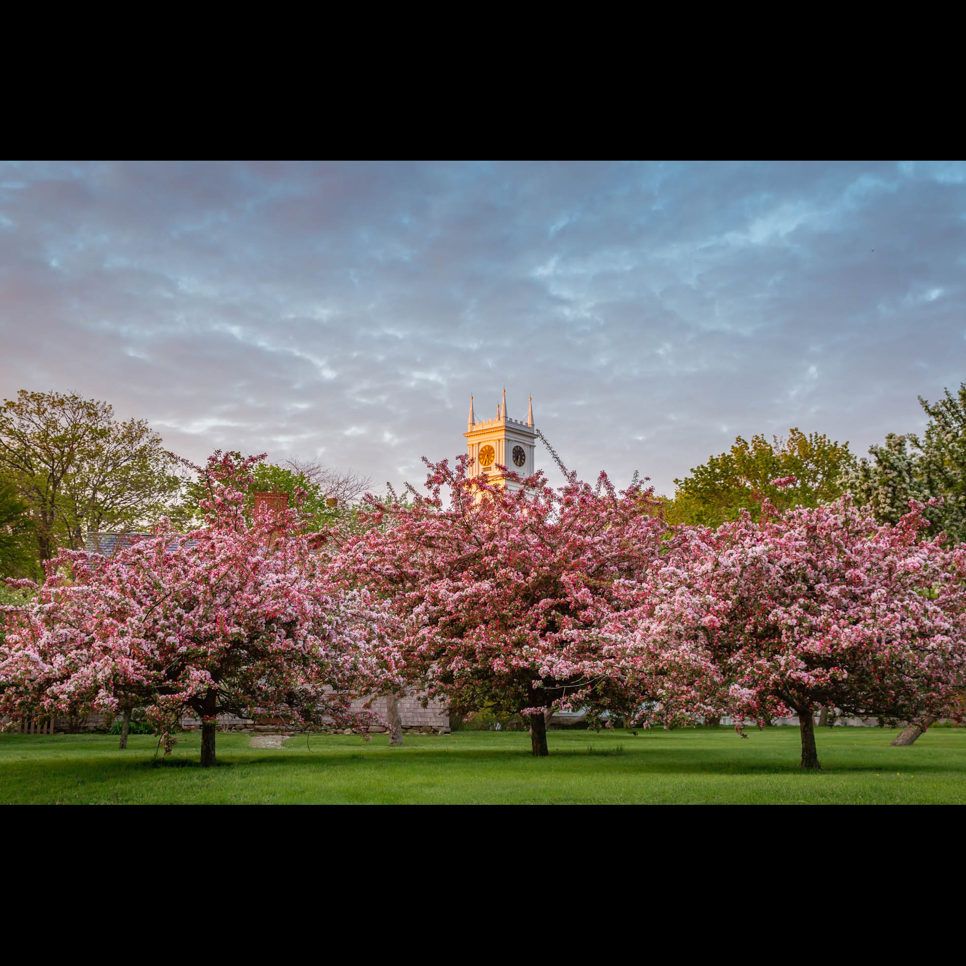 5.16 WHALING CHURCH BLOSSOMS