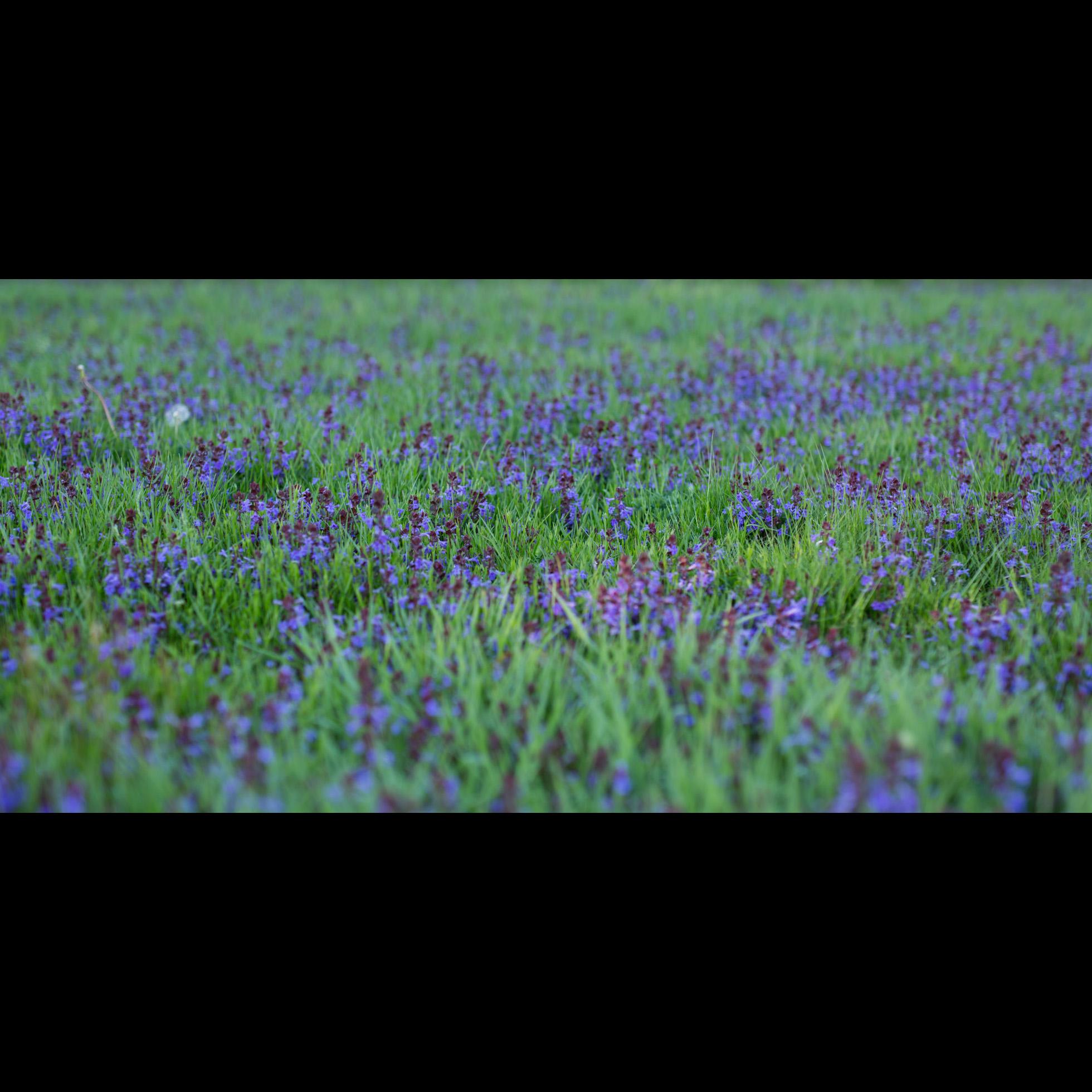 5.8 PURPLE FLOWERS