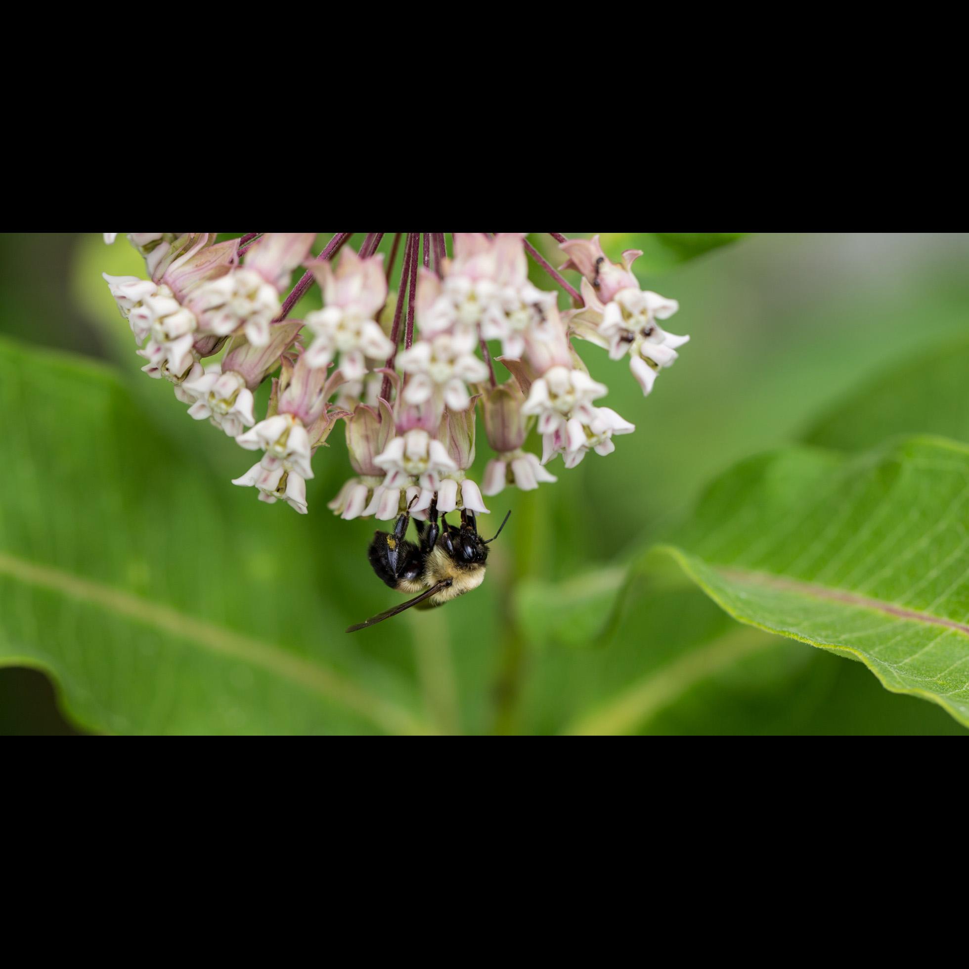 7.11 BEE MACRO