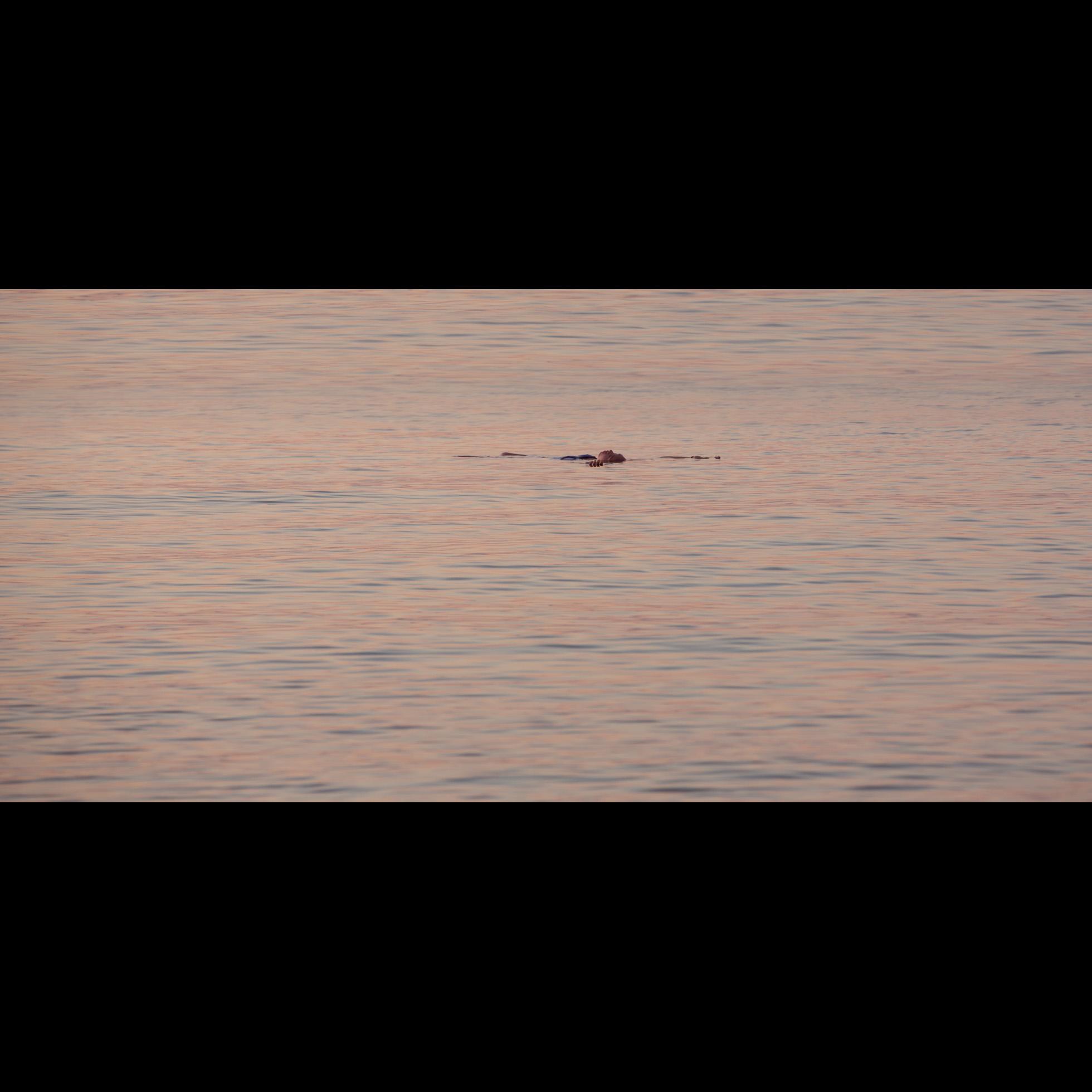 8.27 SUNSET SWIMMER
