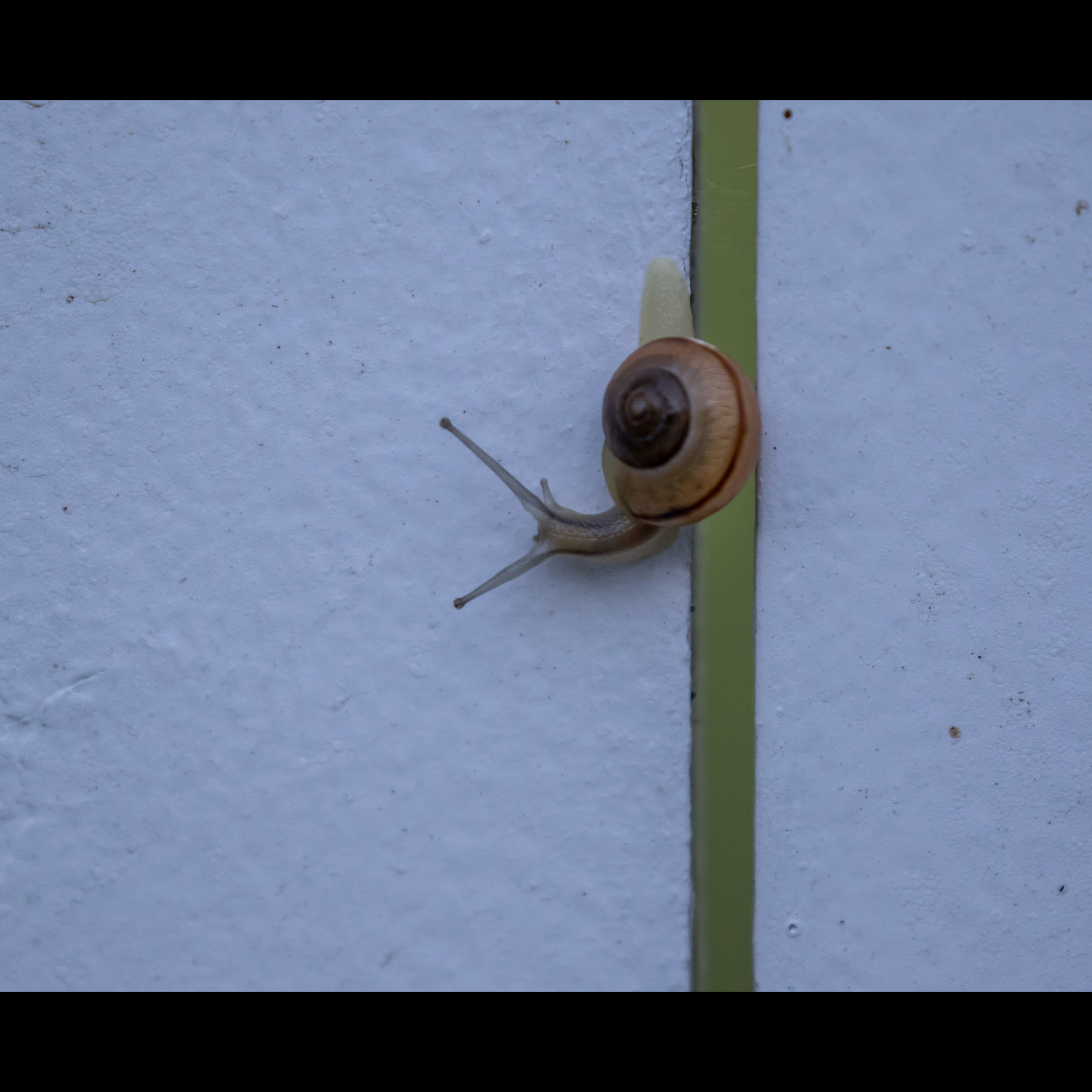 9.22 SNAIL ON THE FENCE